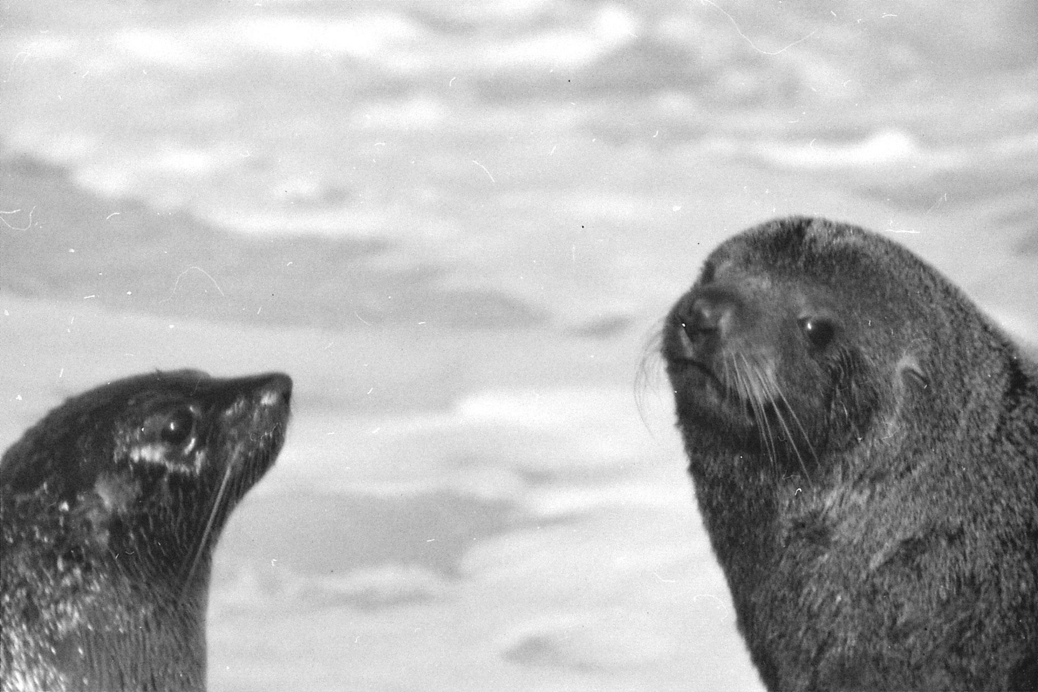 9/8/1990: 6: Kaikoura seals