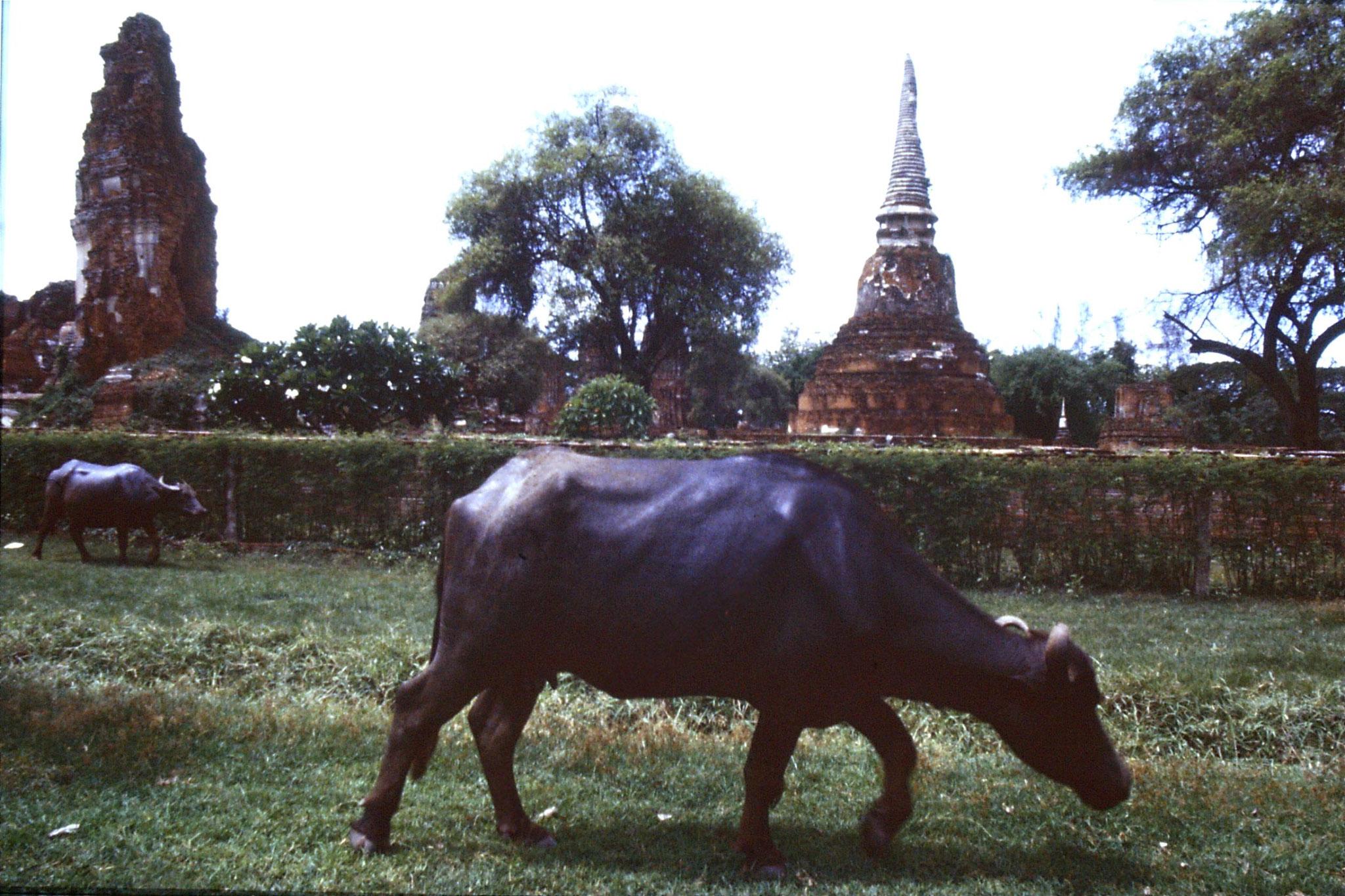 15/6/1990: 5: Ayuttaya, ruins of Wat Phra Mahatat