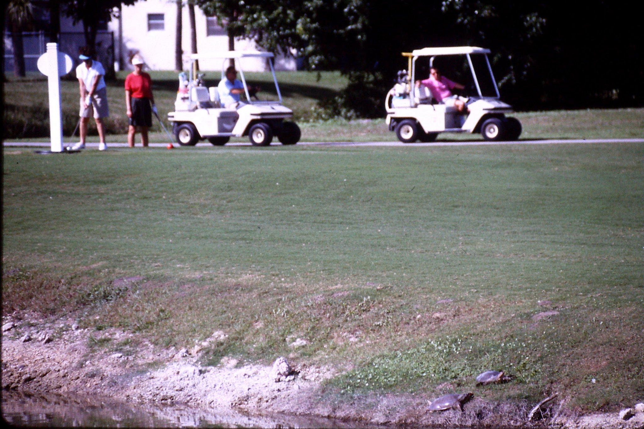 7/1/1991: 29: outside C's flat, golfers and turtles