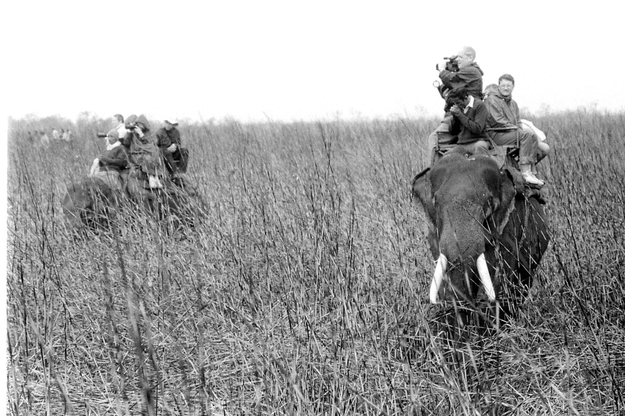 9/4/1990: 26: Kaziranga Indian One Horned Rhino