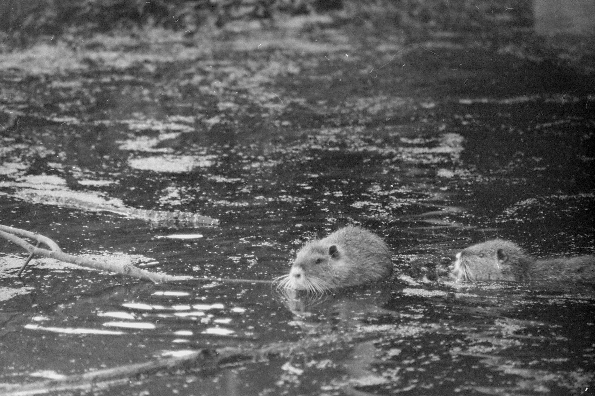 13/1/1991: 4: St Bernard Louisiana State Park