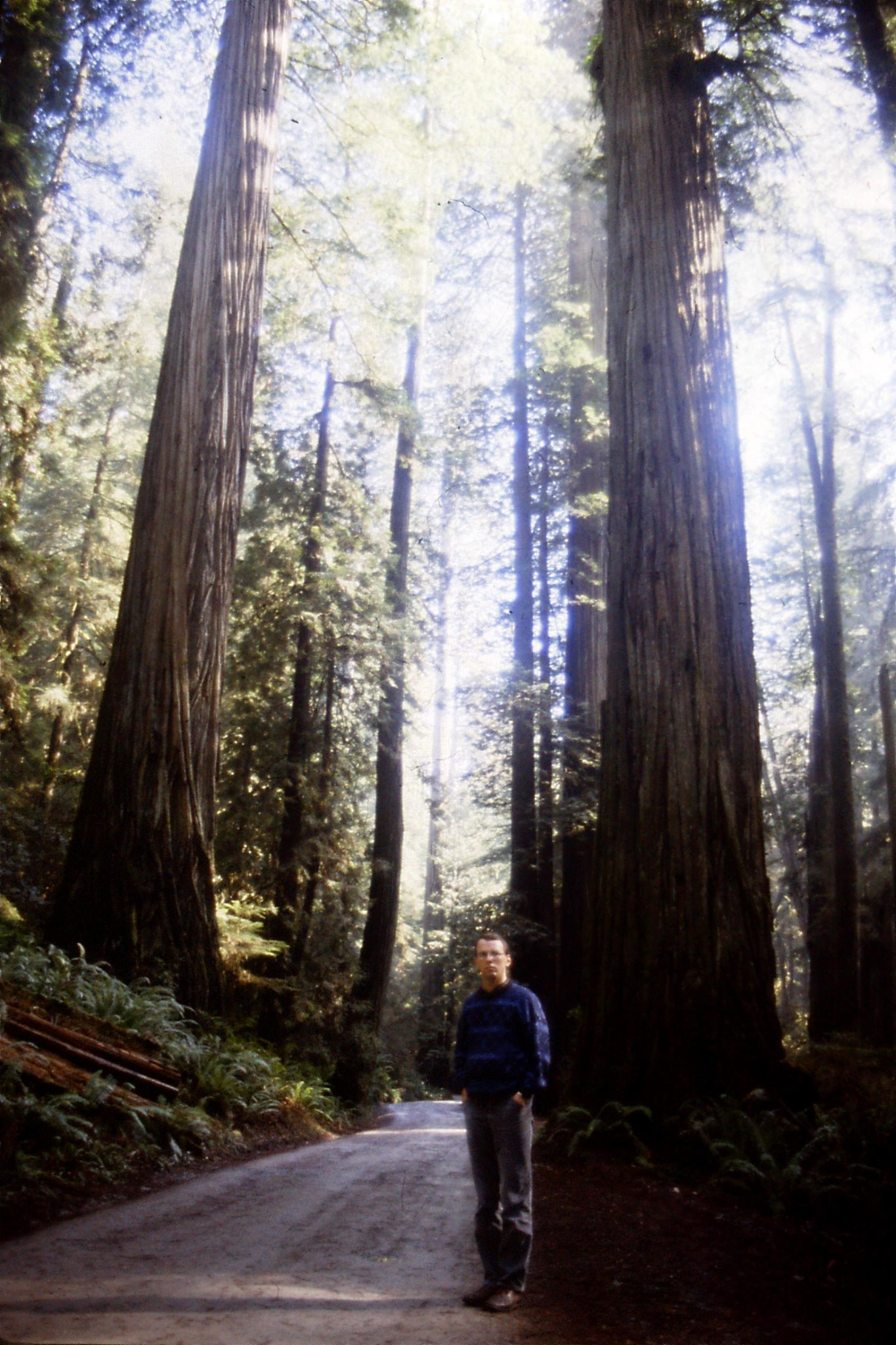 14/2/1991: 35: Jedediah Smith Redwood State Park