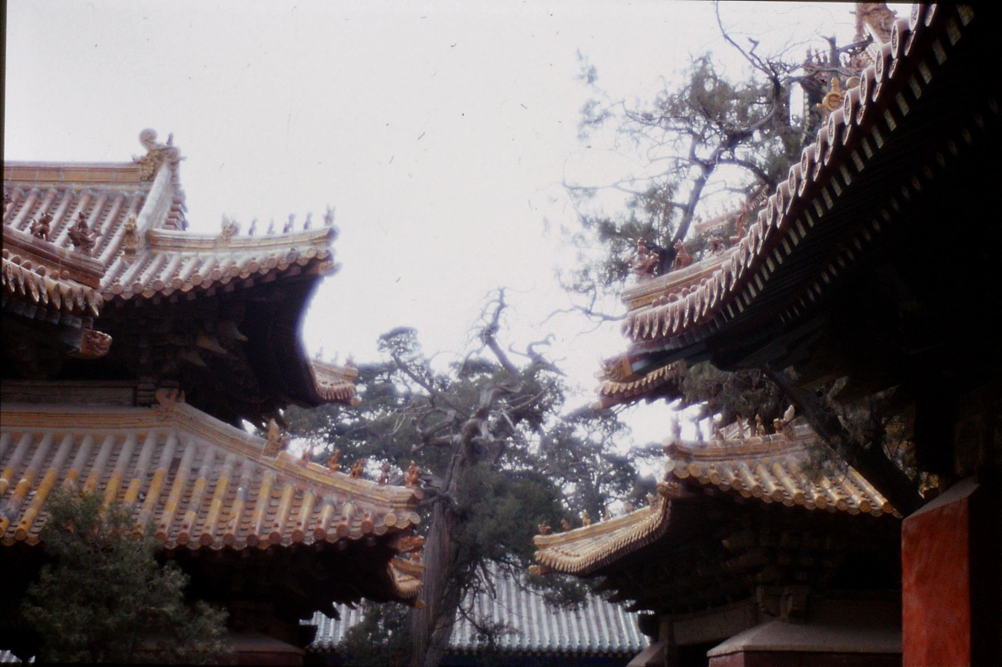 21/2/1989: 0: Qufu temple
