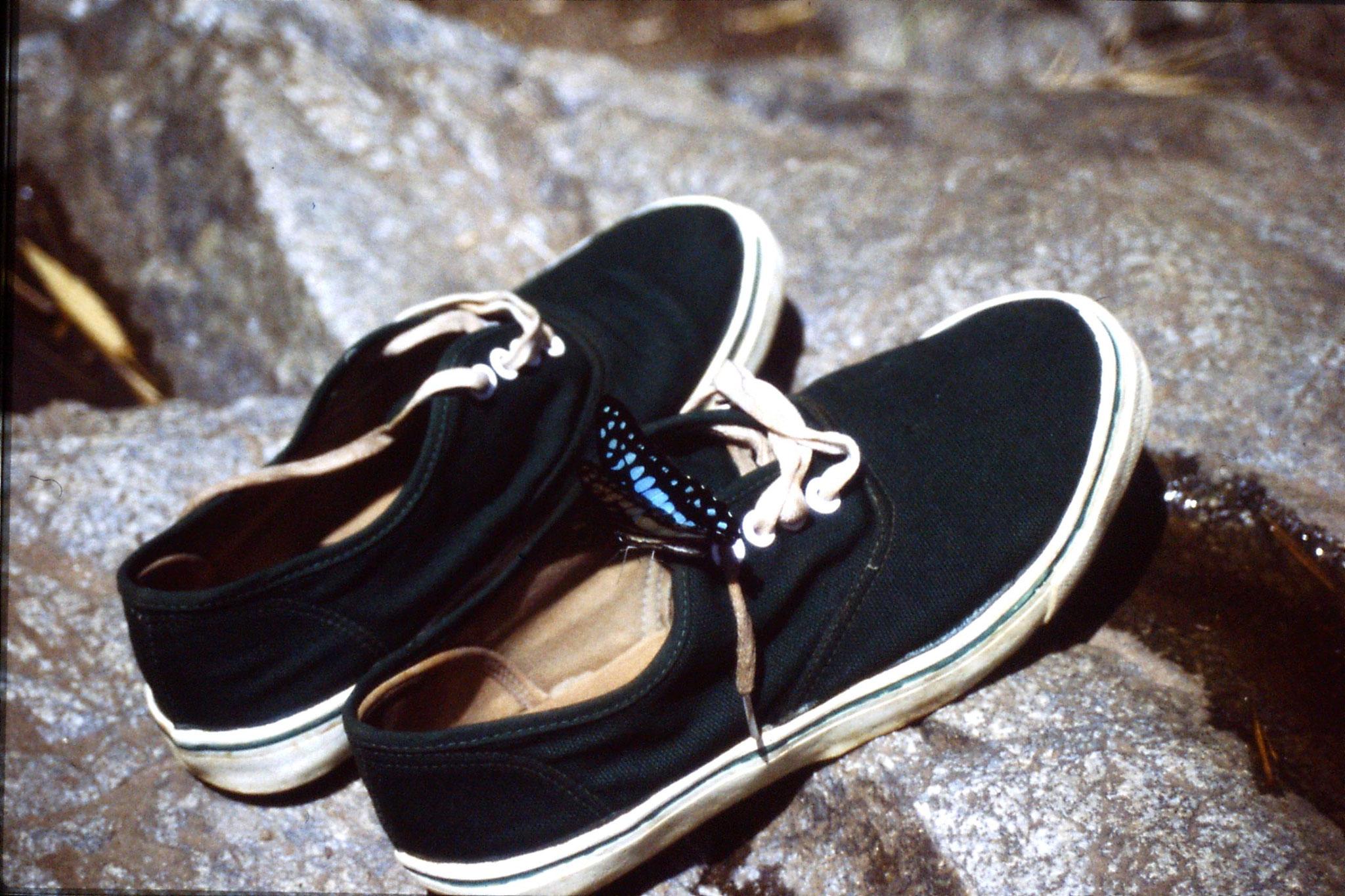12/6/1990: 15: Trek - butterfly
