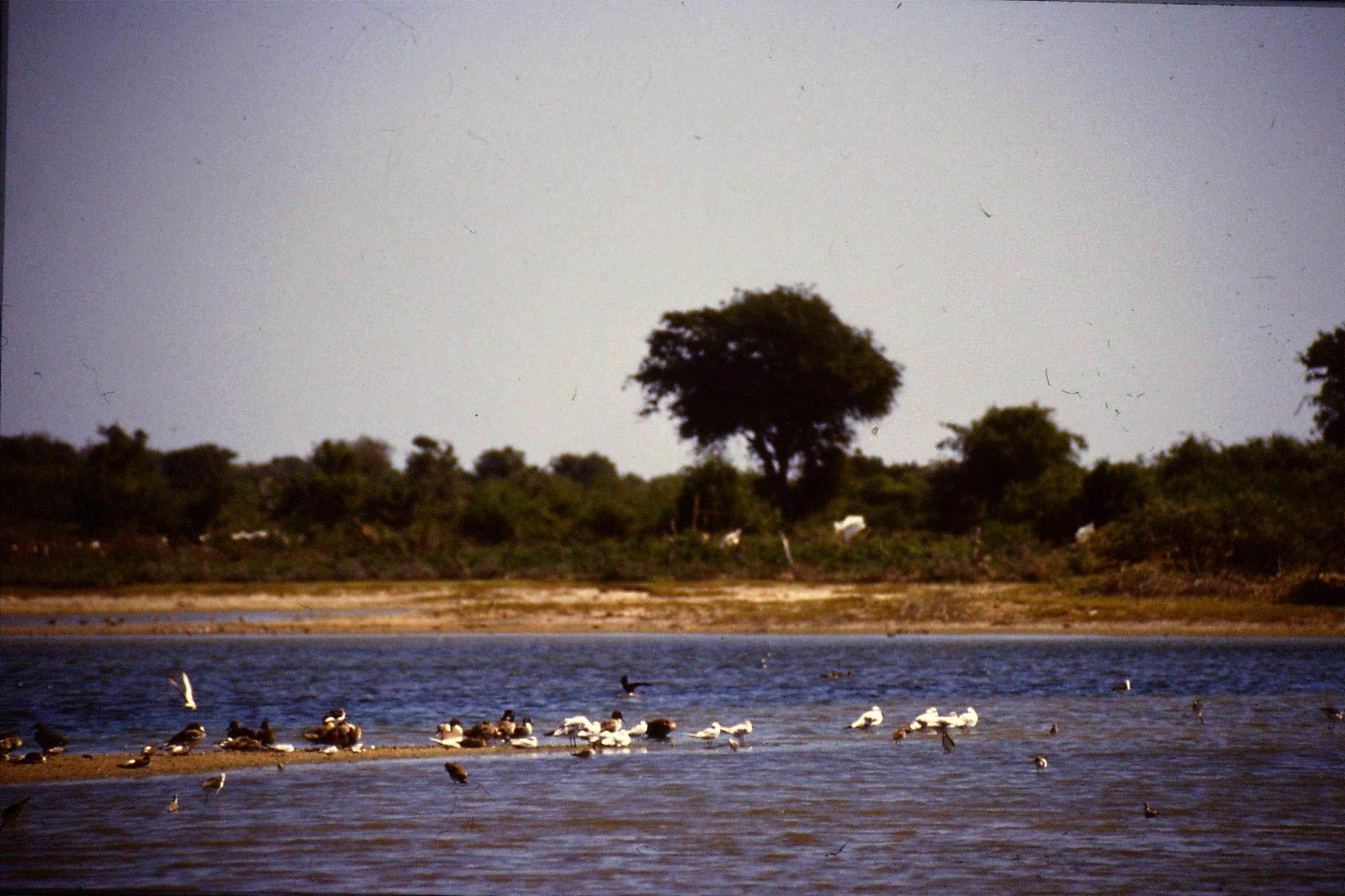 26/1/1990: 36: Kirinda lagoon