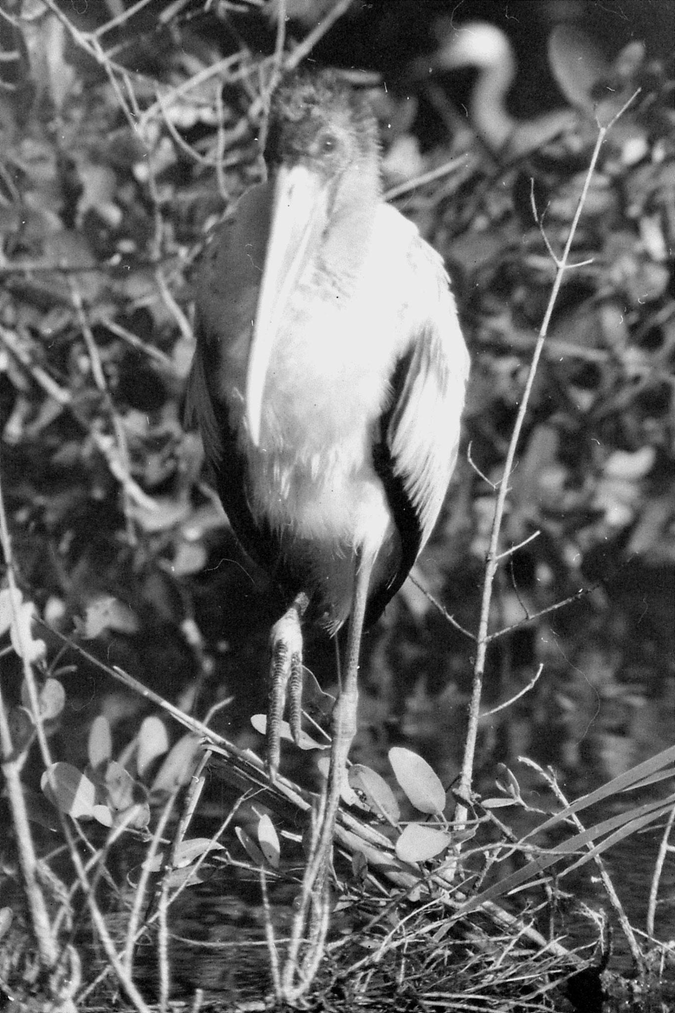 21/12/1990: 13: Everglades