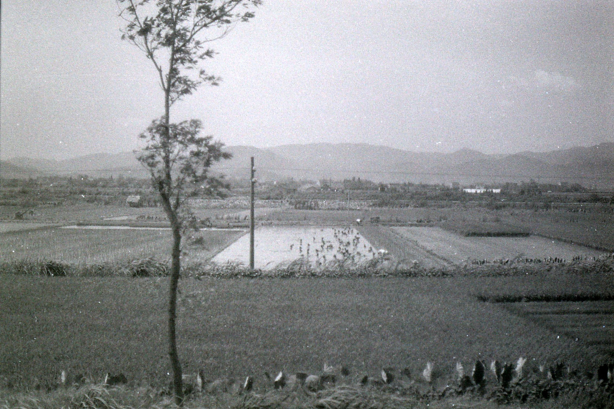 23/7/1989: 22: fields from train to Ningbo