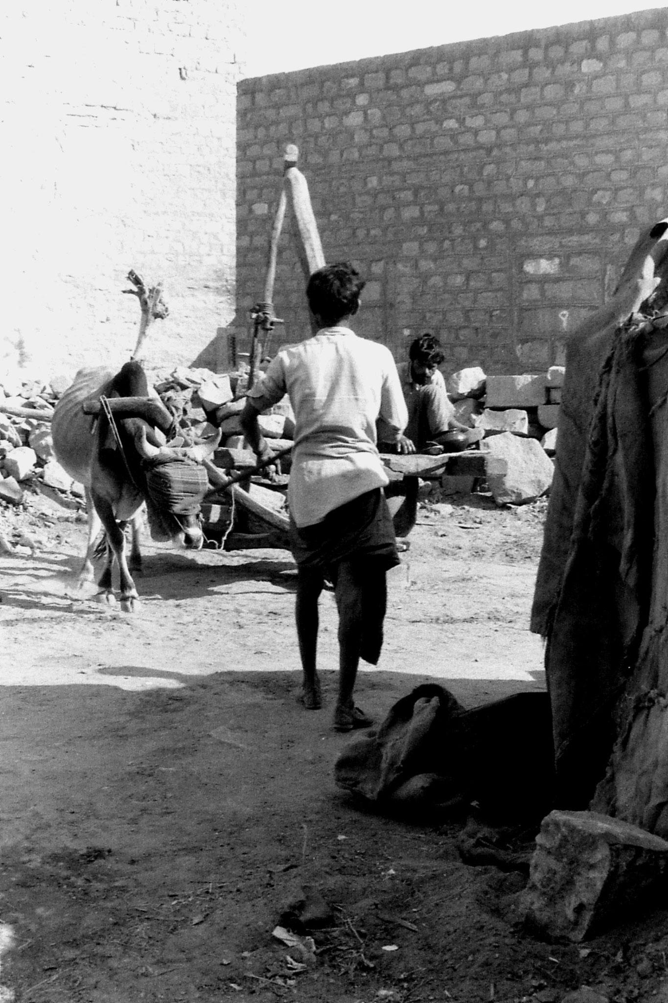 3/12/1989: 26: Jaisalmer, ox mill
