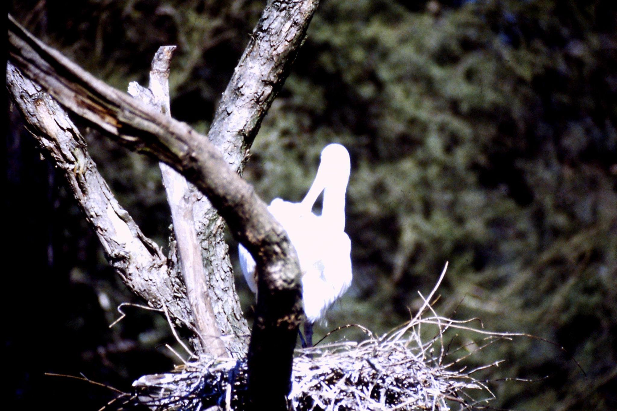 4/10/1990: 20: Healesville  Sanctuary, echidna