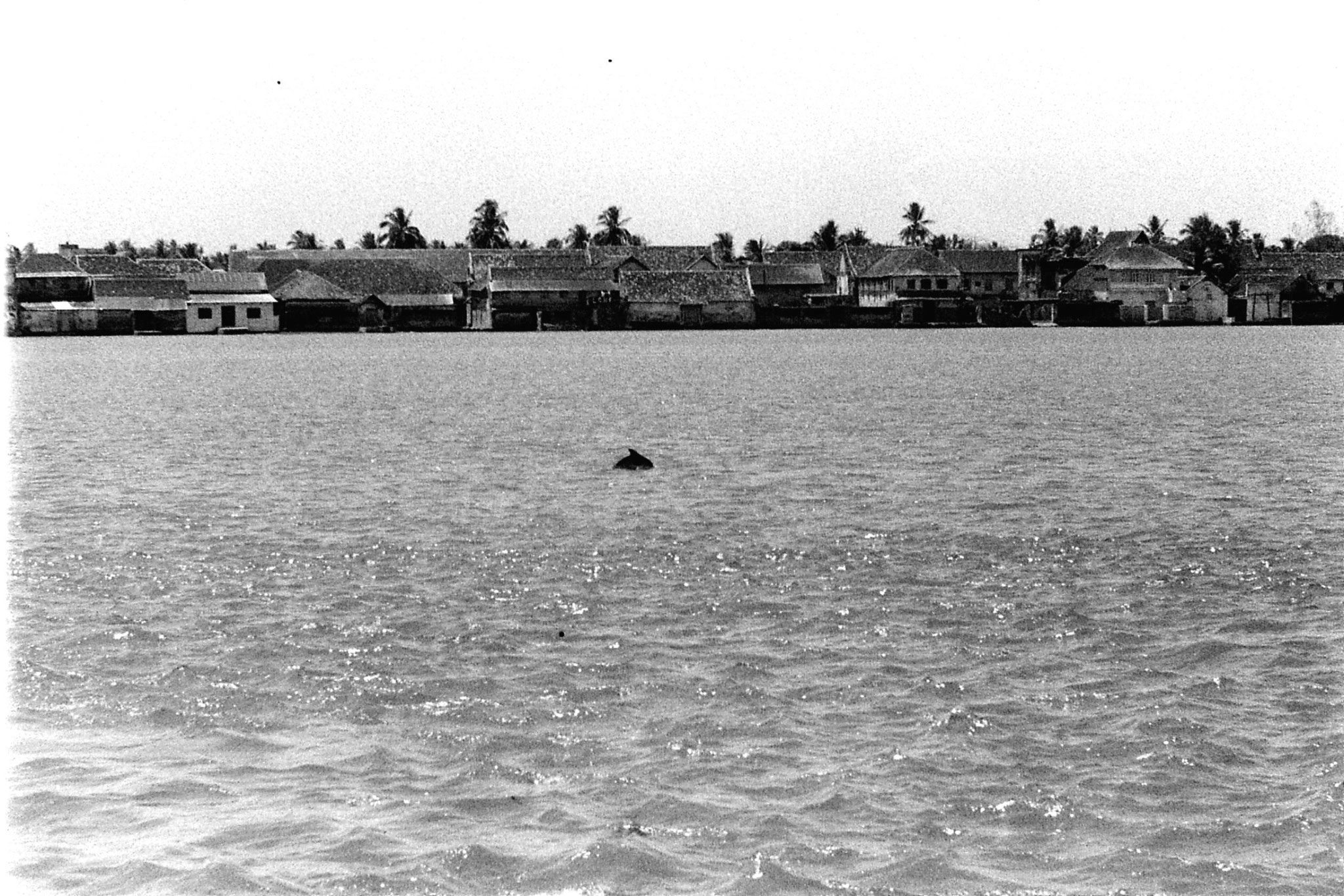 25/2/90: 4: Cochin dolphins and views of Fort Cochin