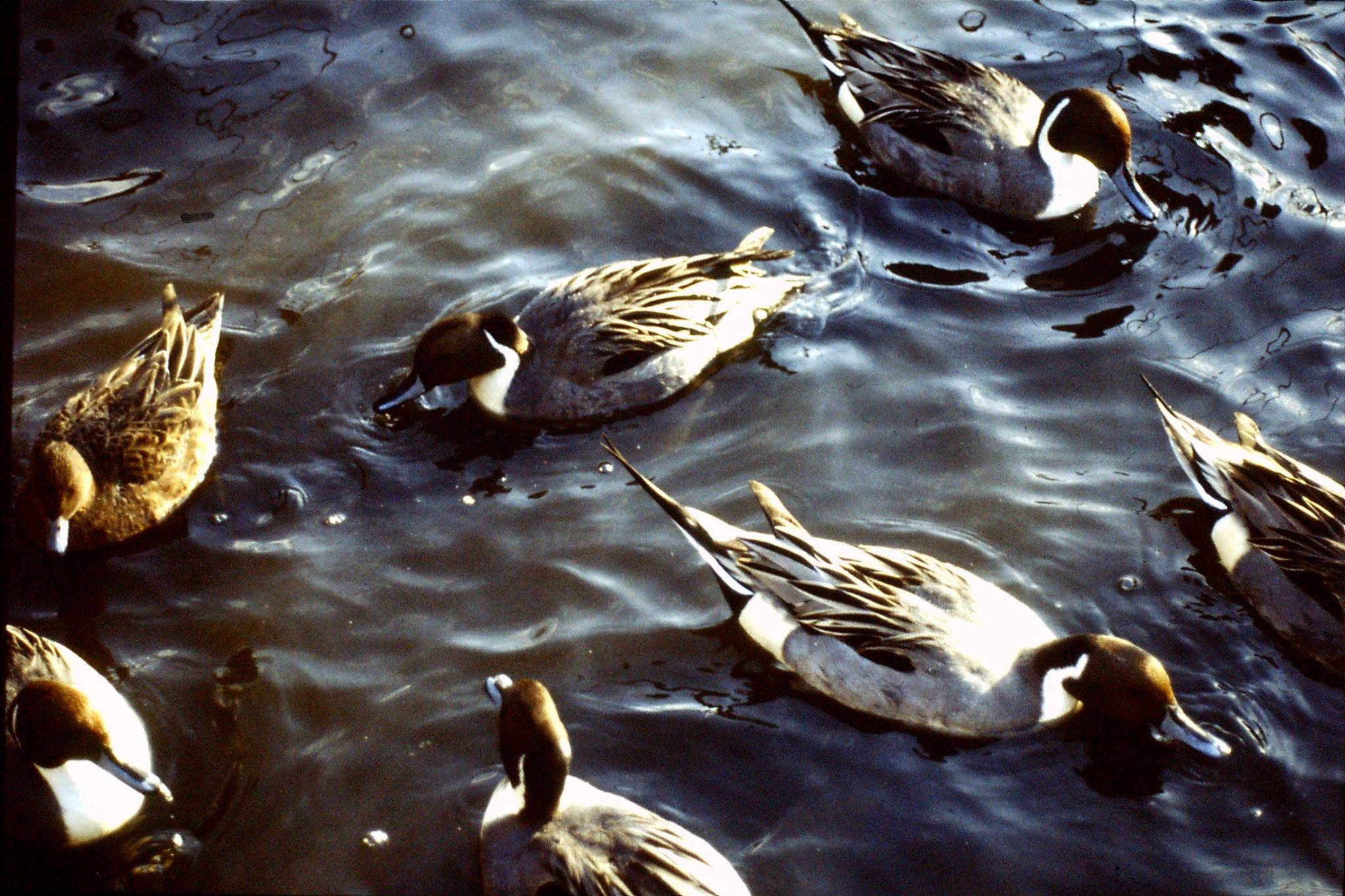 4/1/1989: 3: Ueno Park