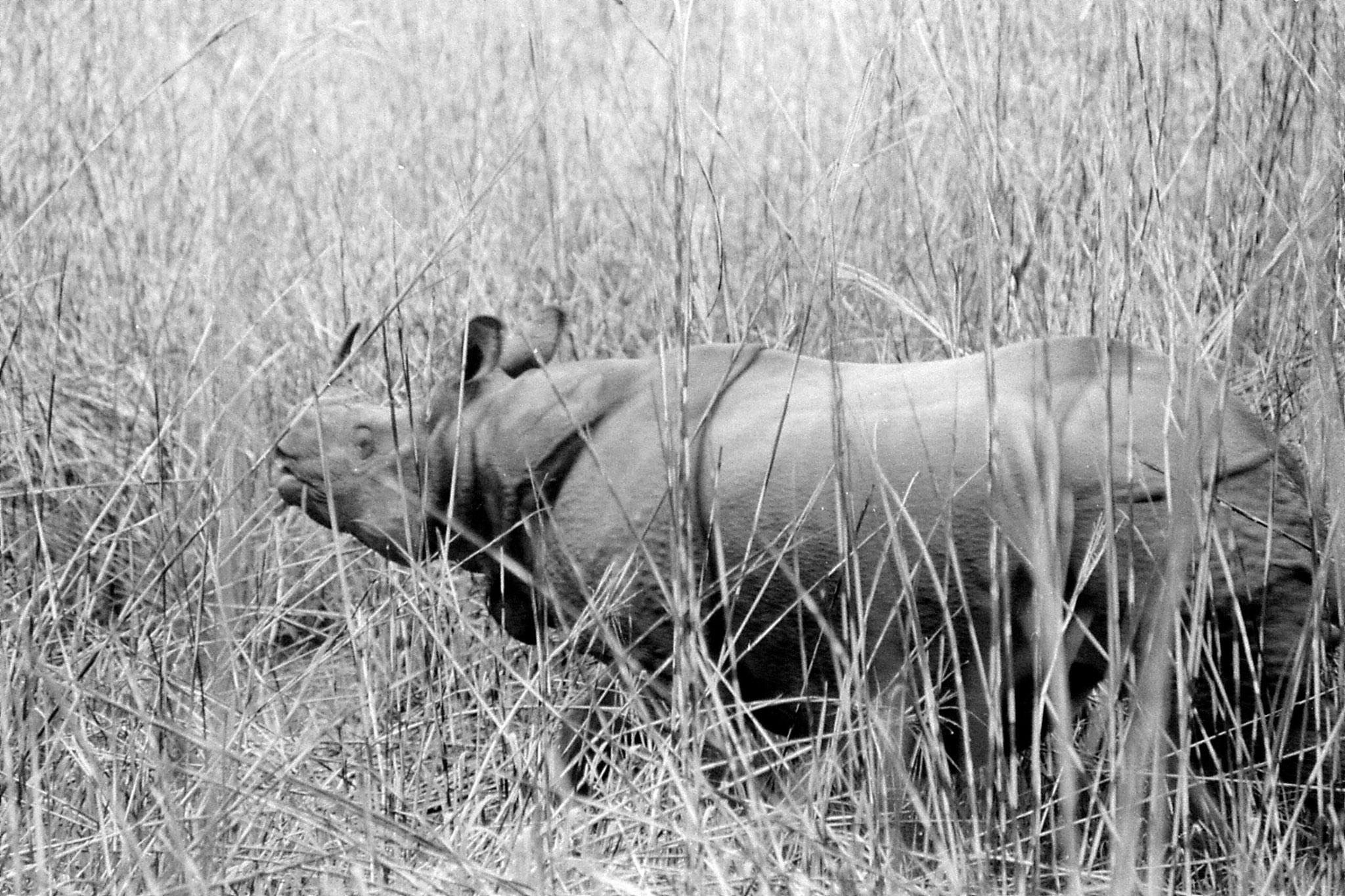 9/4/1990: 24: Kaziranga Indian One Horned Rhino
