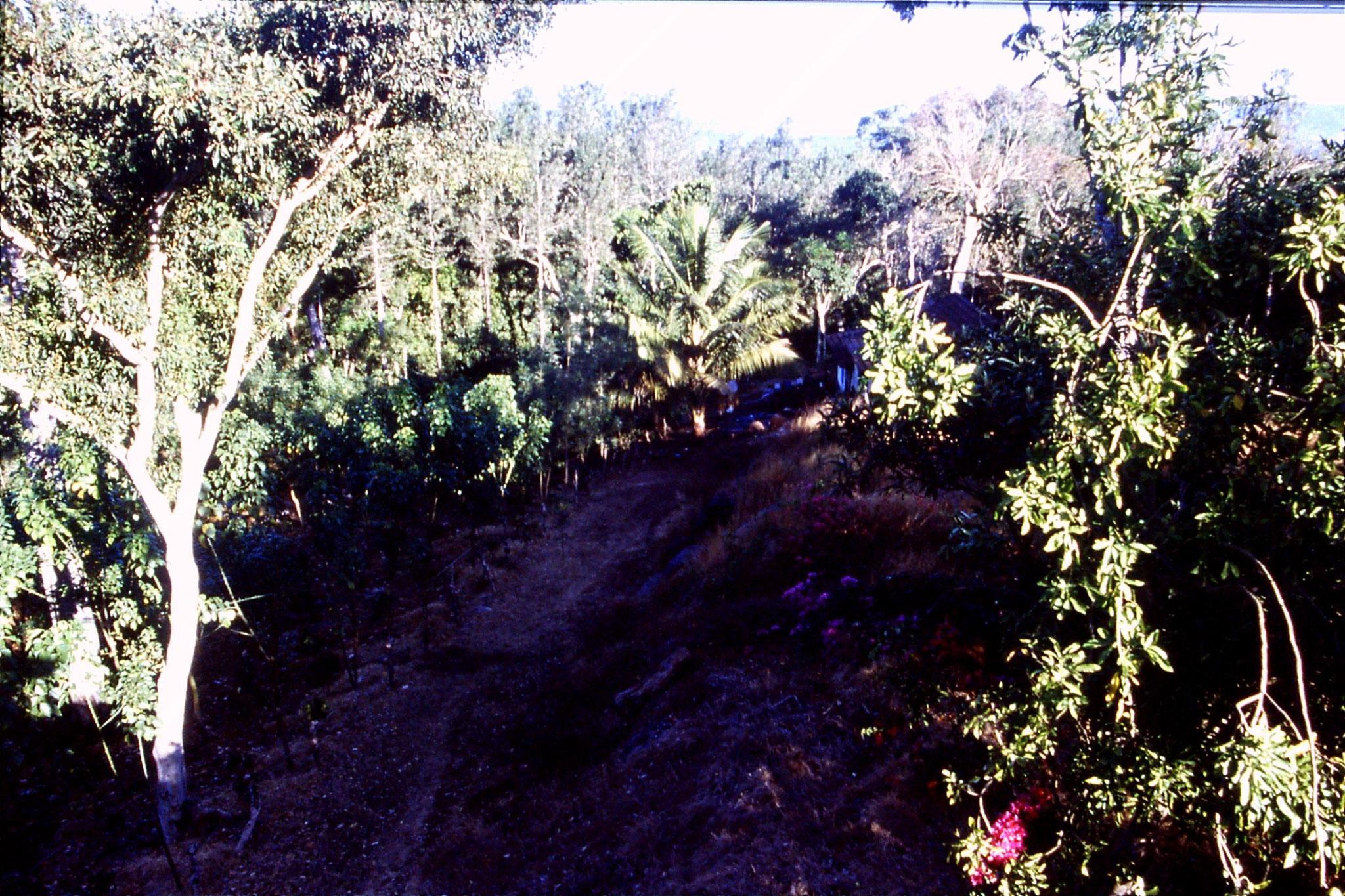 108/2: 9/3/1990 Suntikoppa - garden with coffee bushes