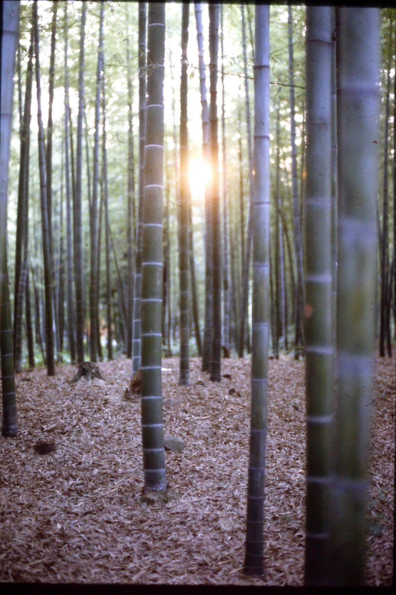31/5/1989: 29: bamboo forest neat Zhe Da