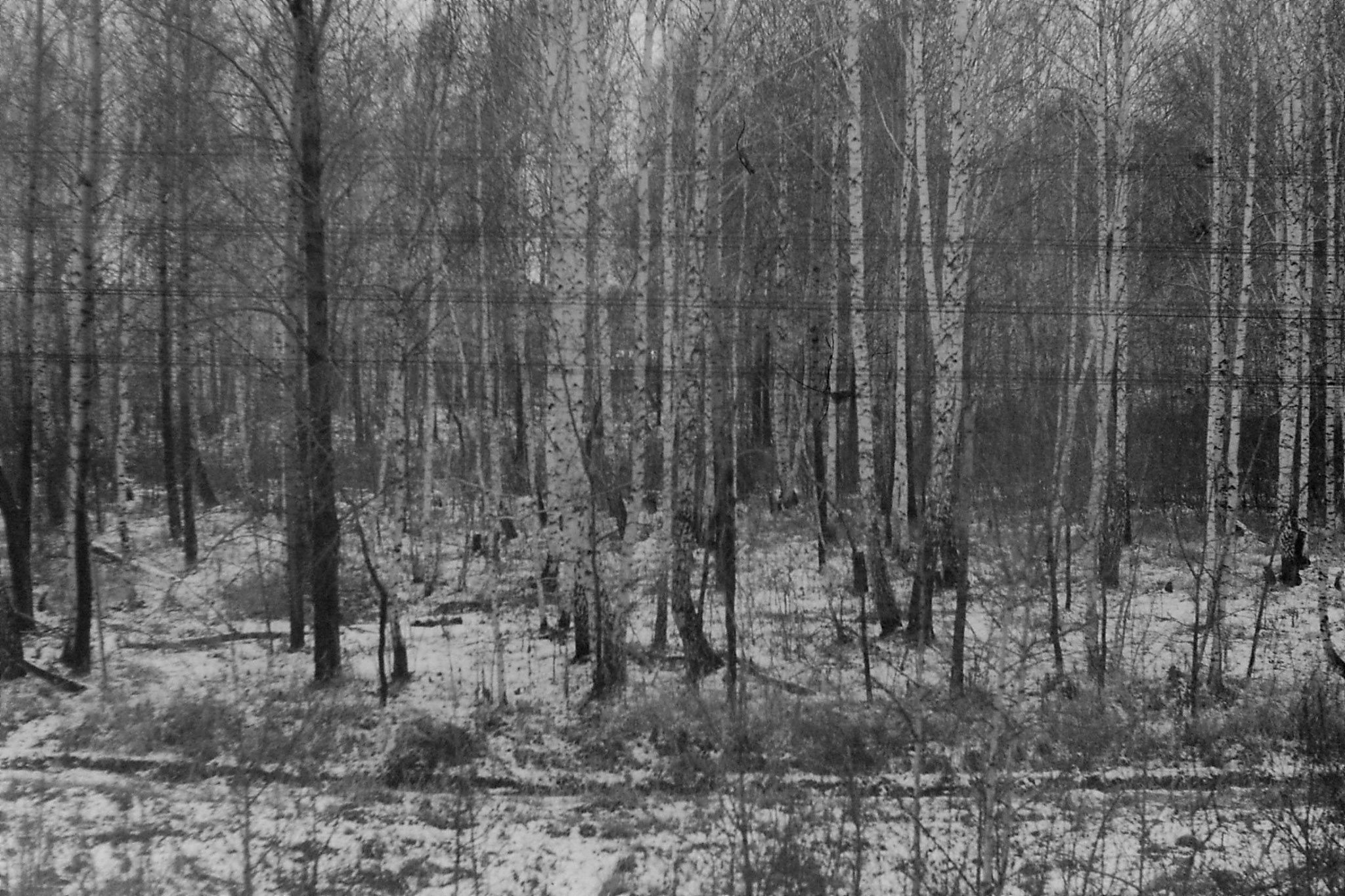 20/10/1988:36:  Western Siberia