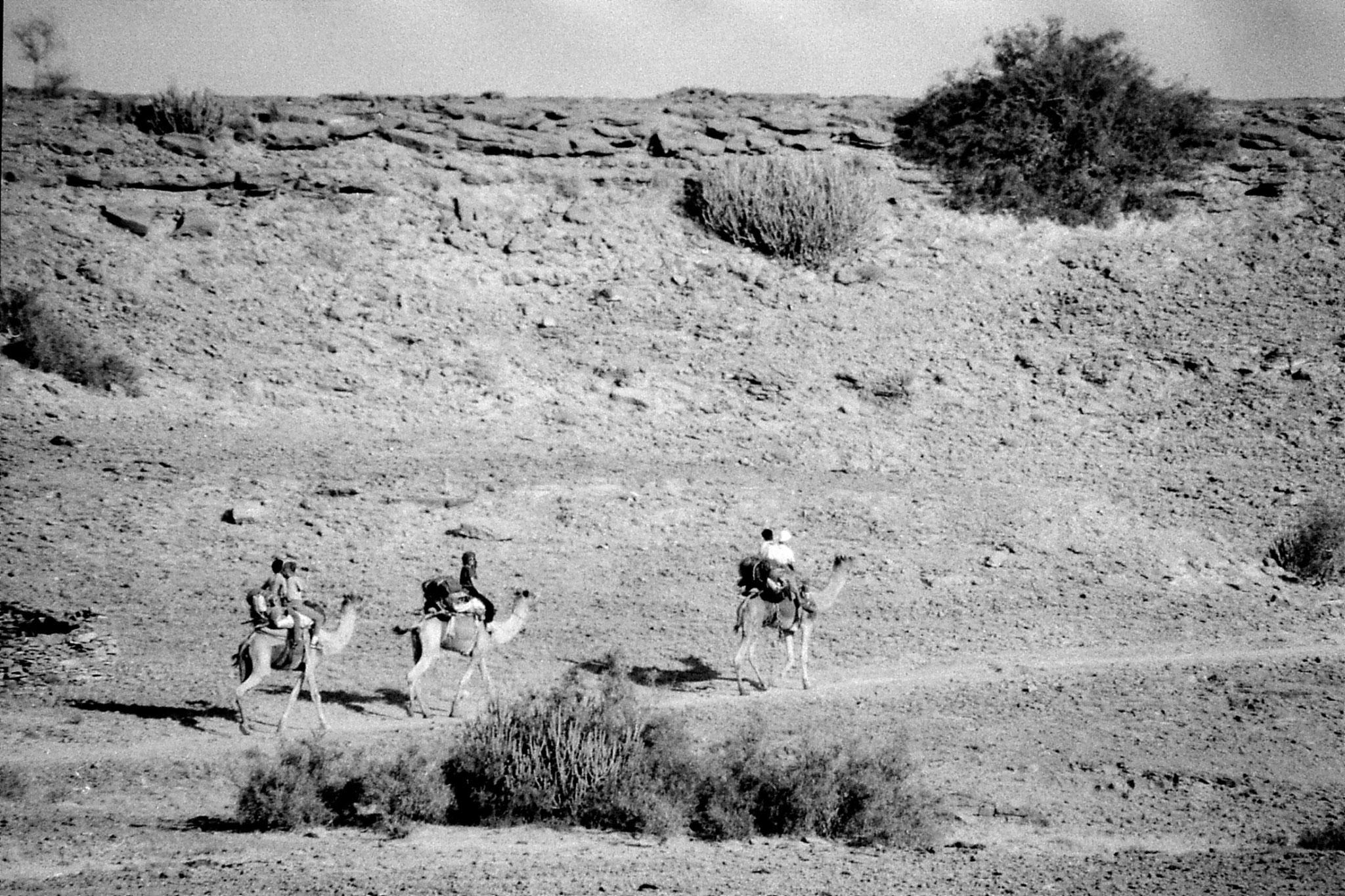4/12/1989: 4: Jaisalmer camels