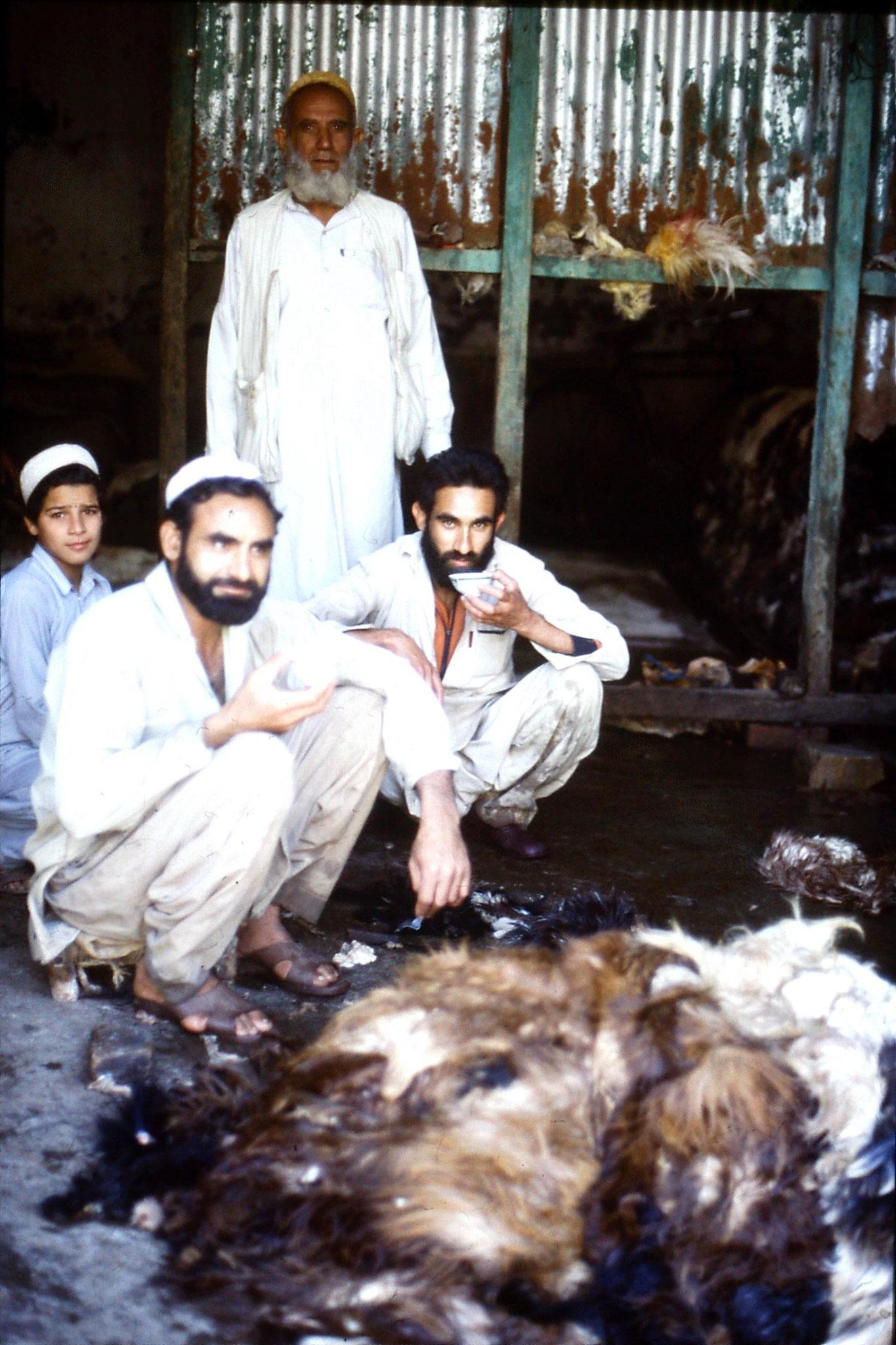 5/11/1989: 18: Peshawar, skinning
