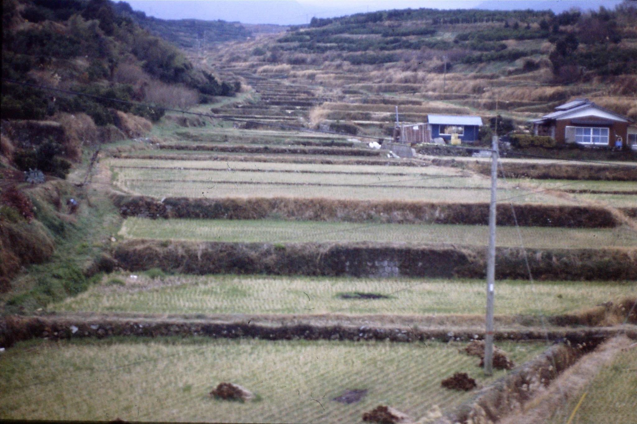 19/1/1989: 34: before Kagoshima