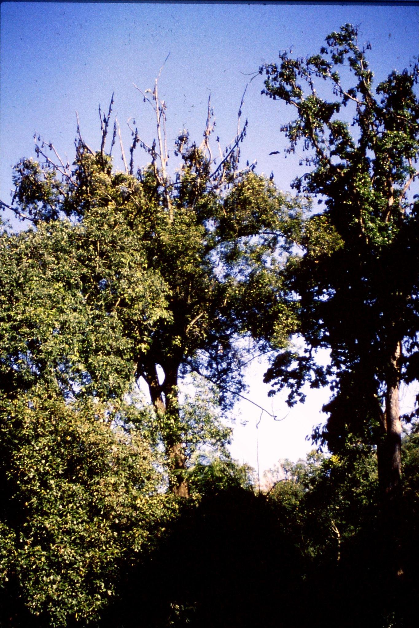 5/2/1990: 33: Kandy Botanic Gardens