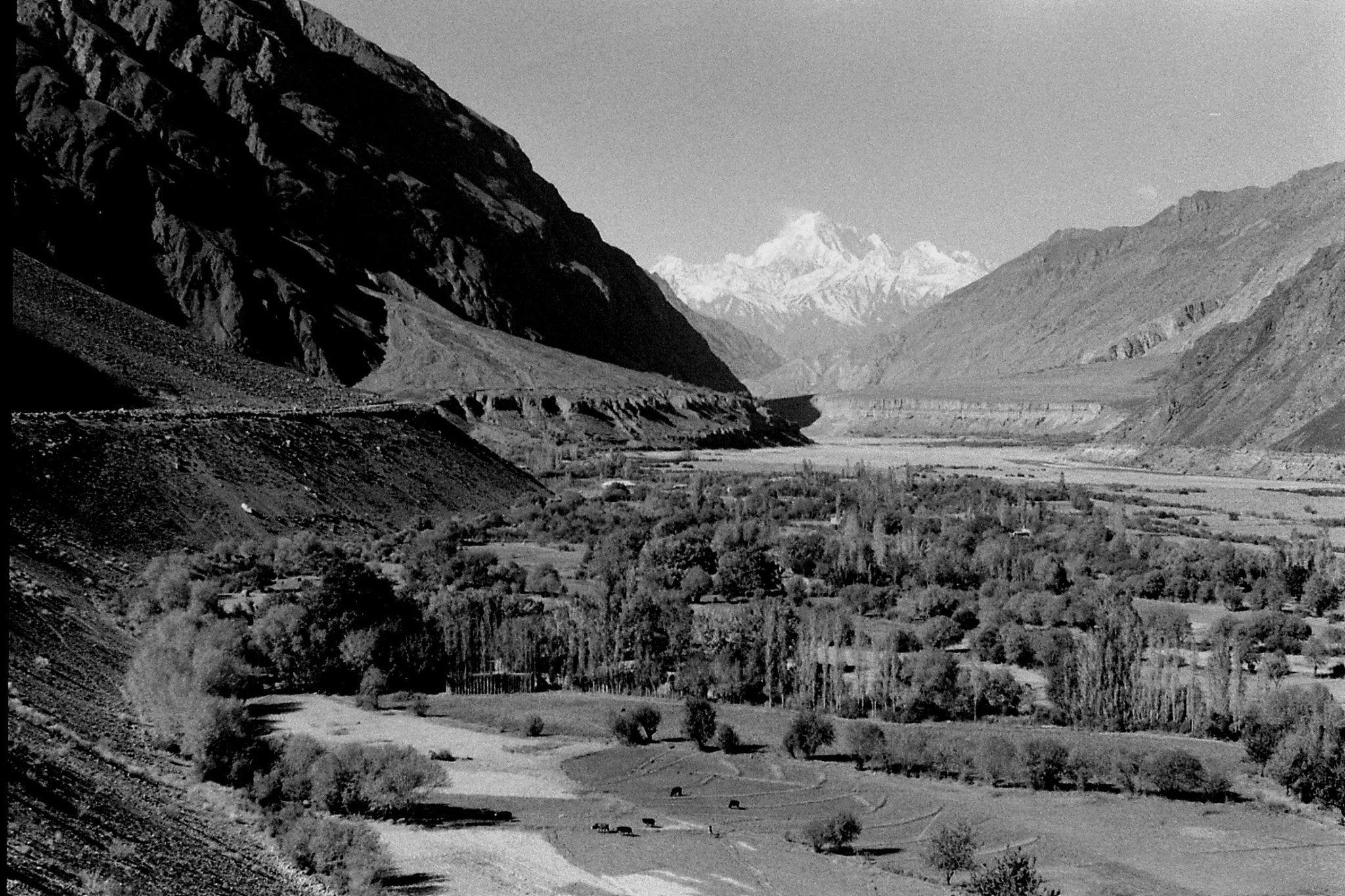 27/10/1989: 14: Sarghoz village and Tirich Mir