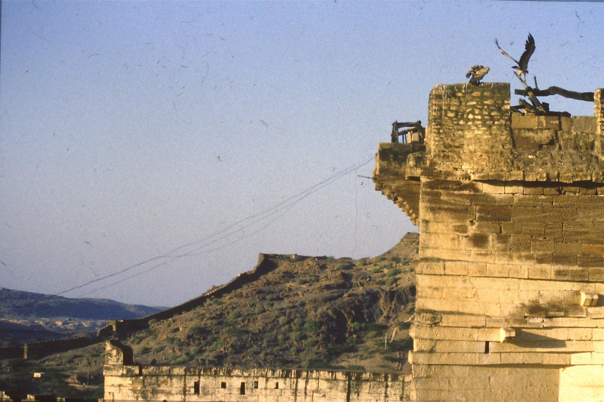 28/11/1989: 1: Jodhpur Red Fort vultures