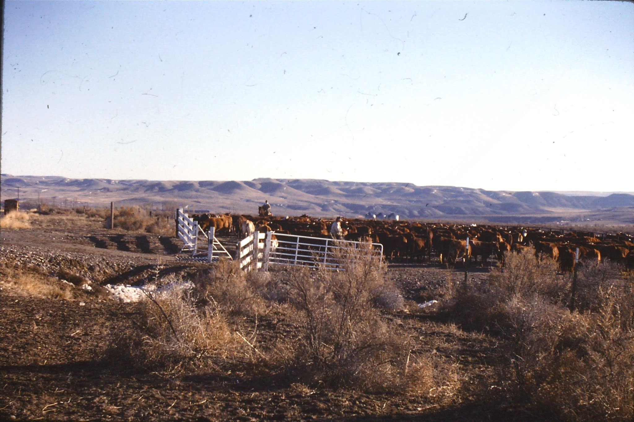 24/1/1991: 35: Bruneau Sand Dunes: cowboys
