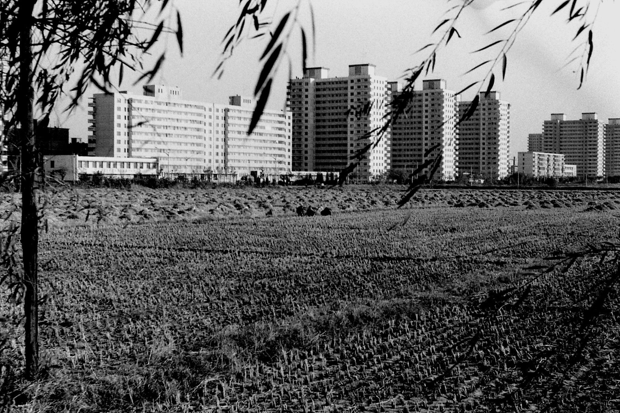 3/11/1988: 20: Nw Beijing