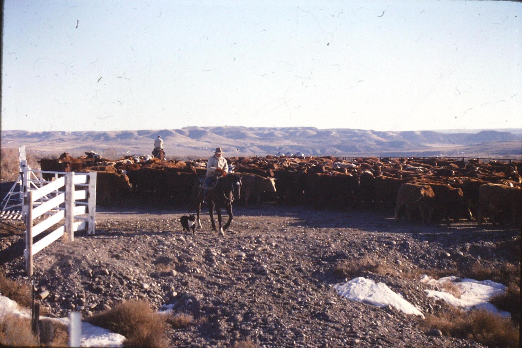 24/1/1991: 36: Bruneau Sand Dunes: cowboys