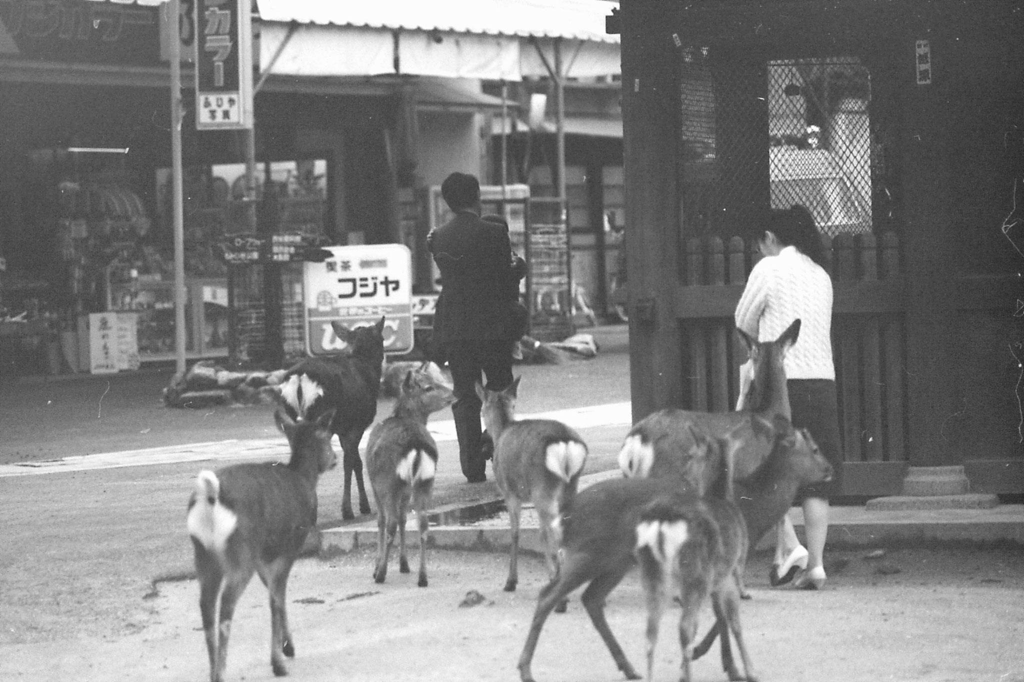 23/1/1989: 2: Miyajima