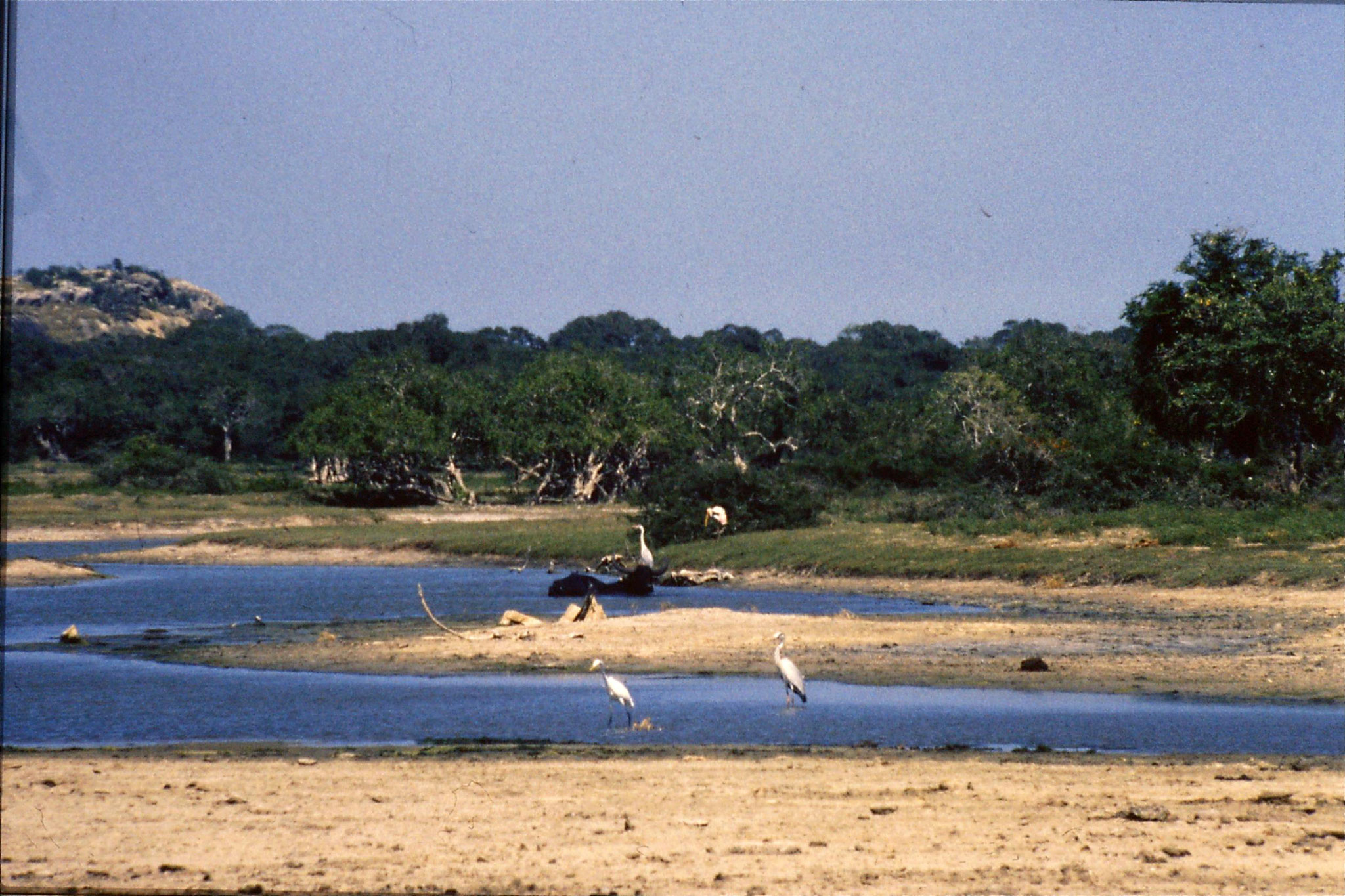27/1/1989: 25: Yala National Park