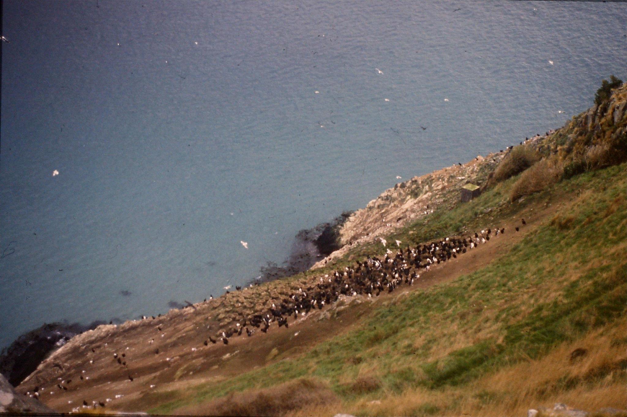 18/8/1990: 12: Dunedin, albatross colony