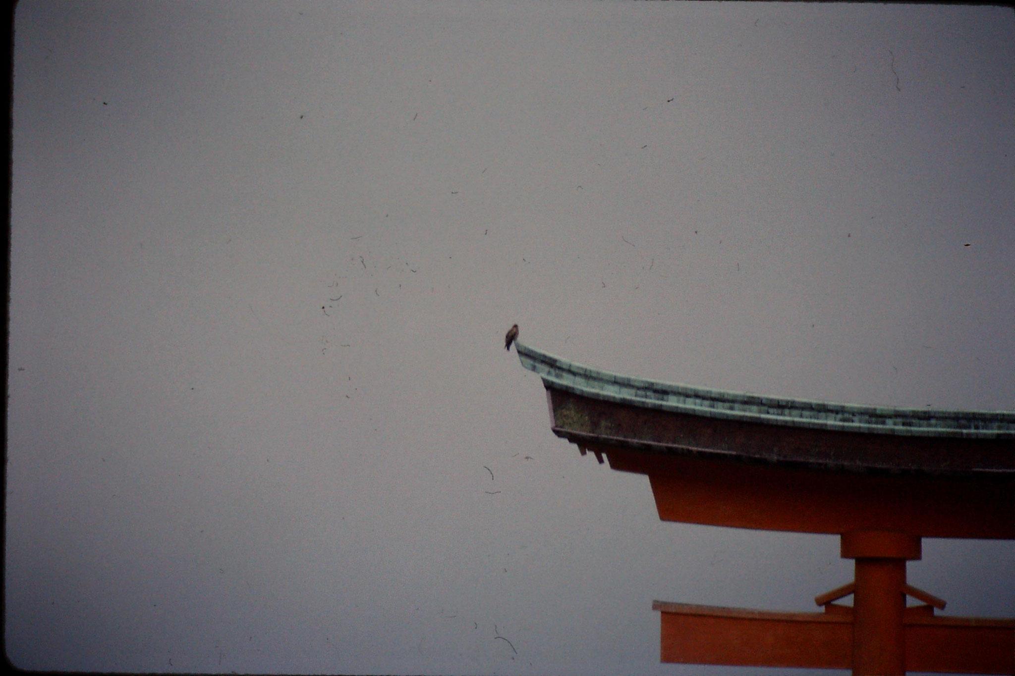 23/1/1989: 8: Miyajima