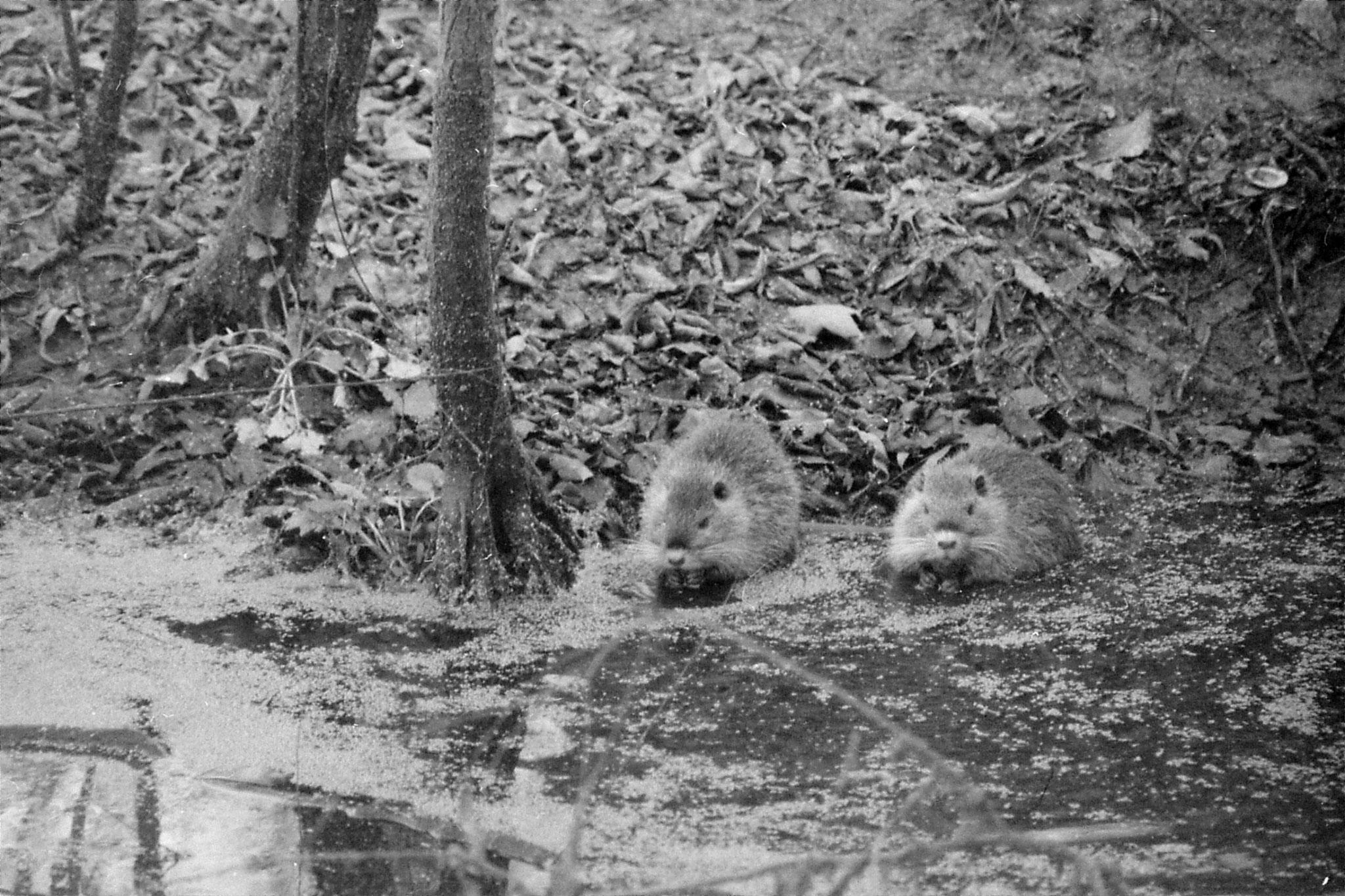 13/1/1991: 0: St Bernard Louisiana State Park