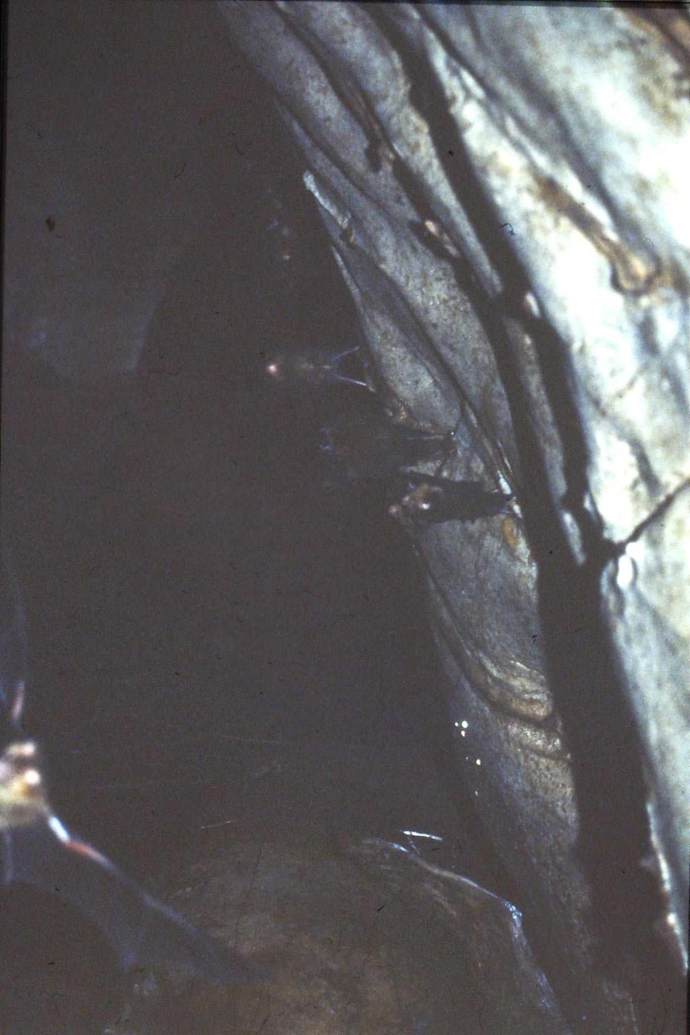 26/6/1990: 20: Tamen Negara bat cave