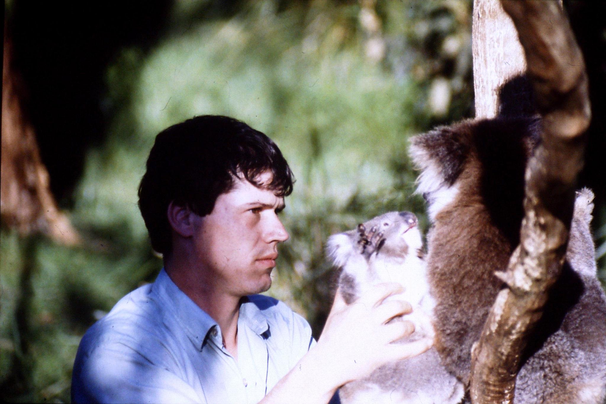 4/10/1990: 24: Healesville  Sanctuary, koalas