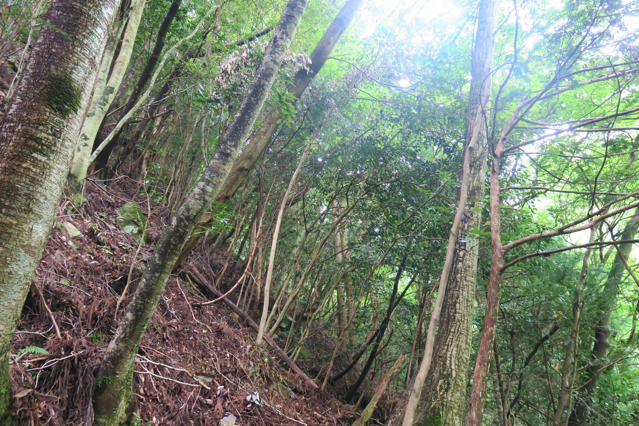 馬立トラスト地(愛媛県四国中央市) 2018年取得 約10ha