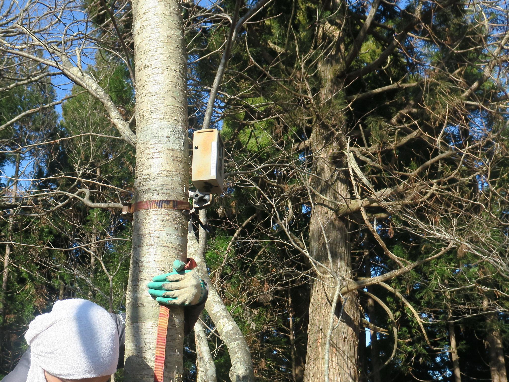自動撮影カメラ設置による野生動物の生息調査
