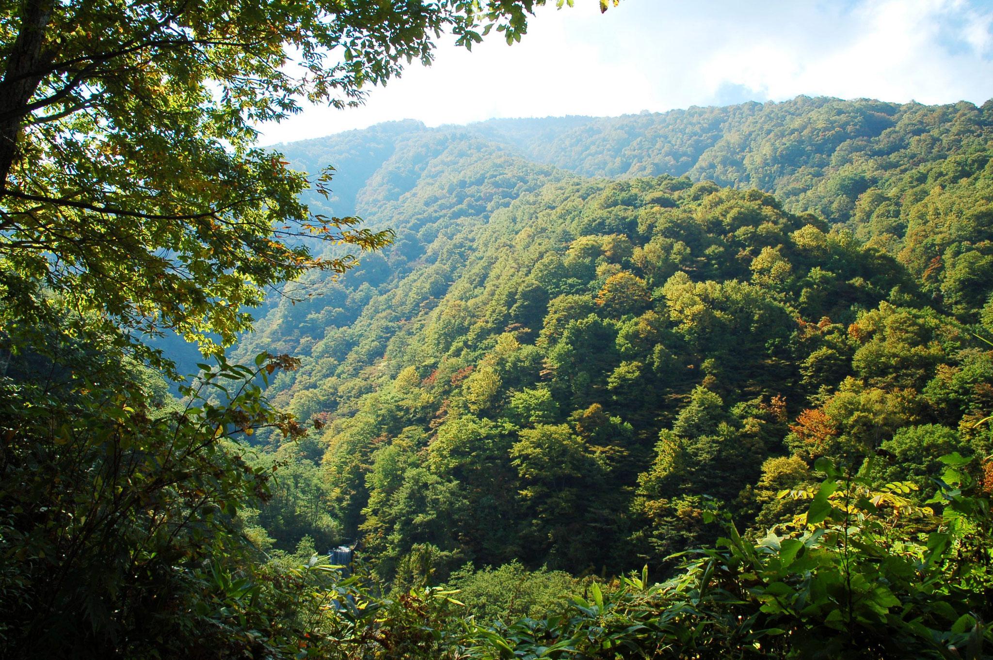 奥飛騨トラスト地(岐阜県高山市) 2006年取得 約82ha