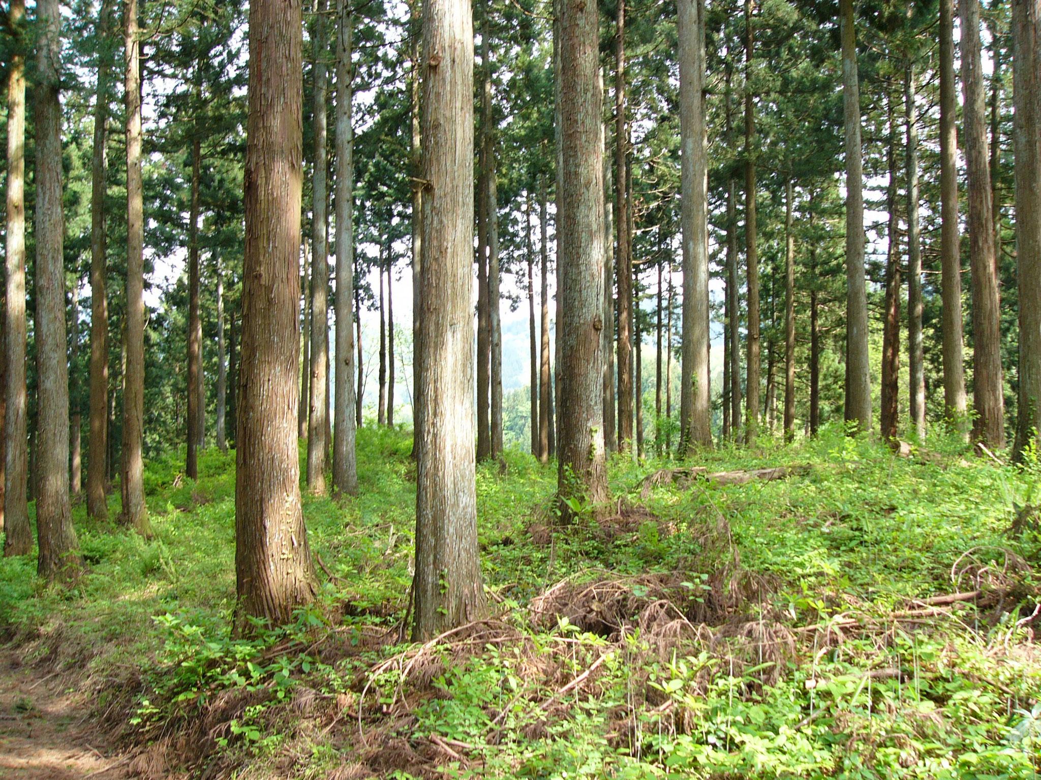 渡邊士乃武自然保護区  島尻トラスト地(富山県魚津市) 2006年取得 約2ha