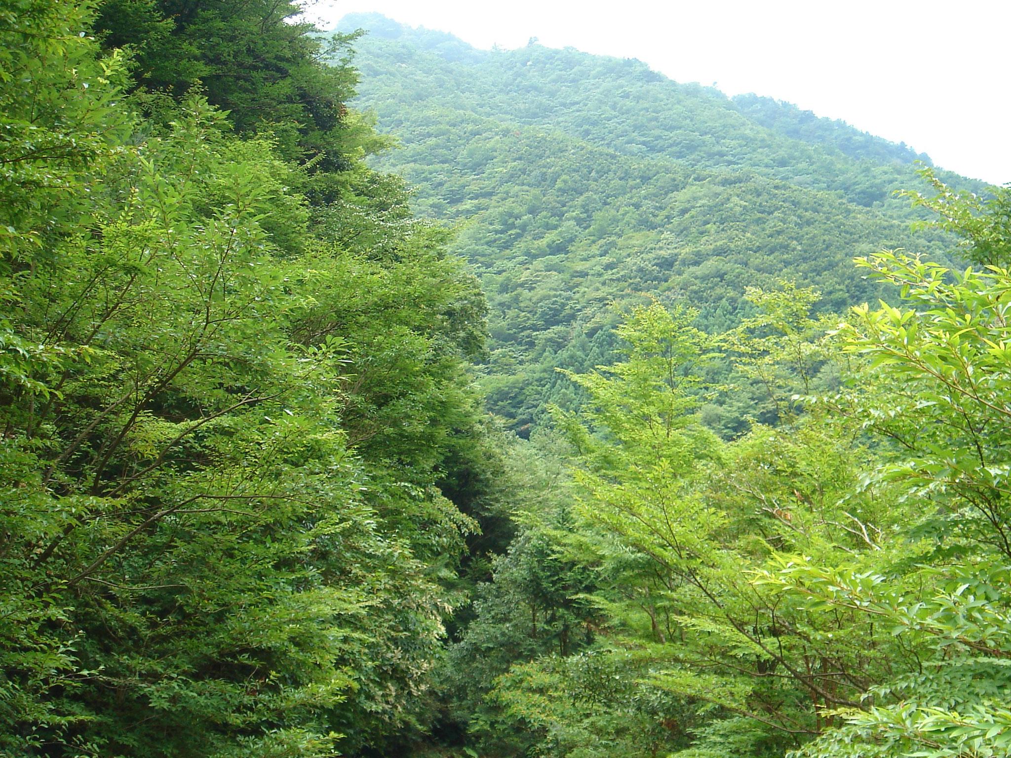 父ケ谷トラスト地(三重県大台町) 2010年取得 約268ha