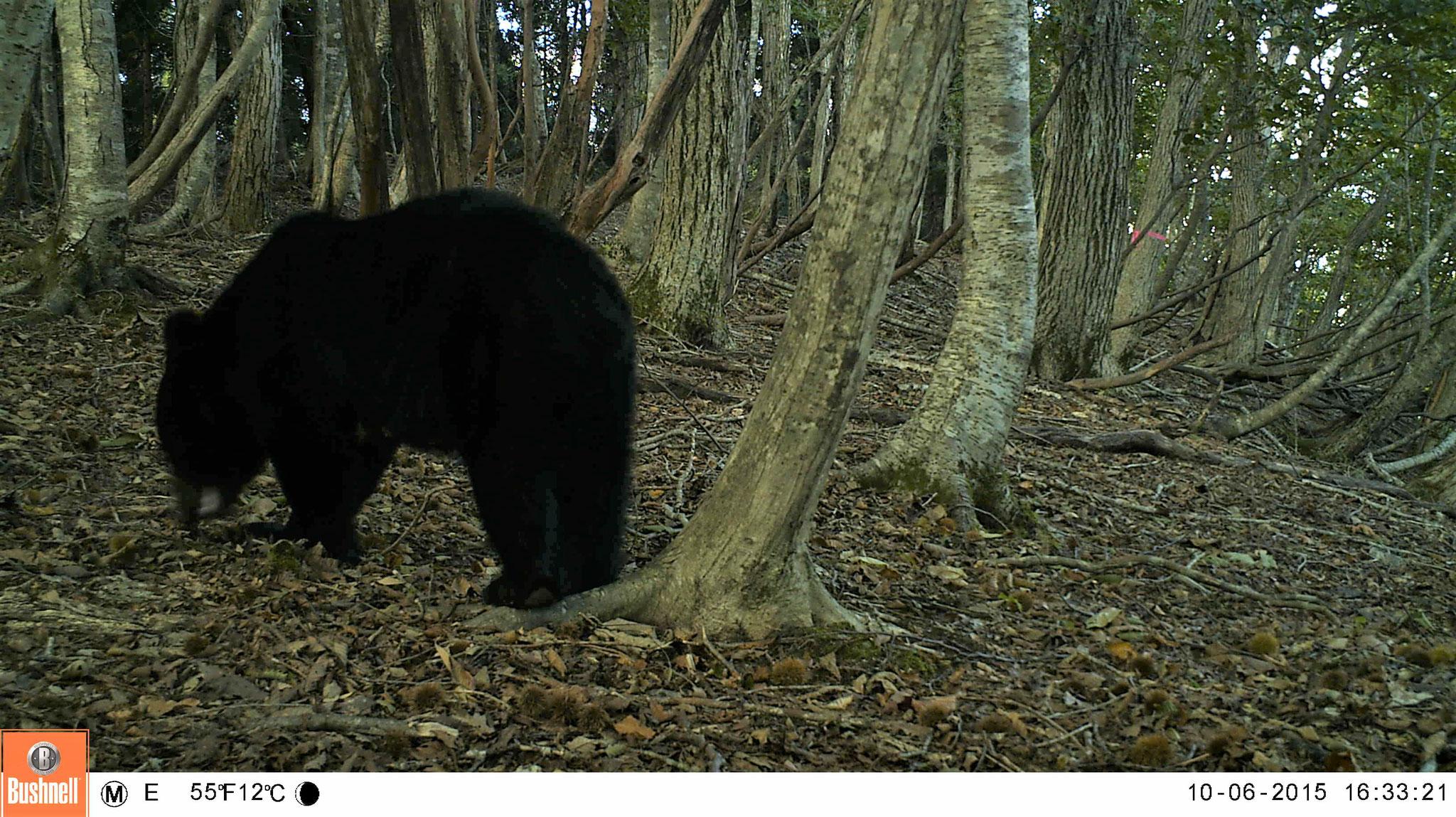 自動撮影カメラで撮影した野生動物