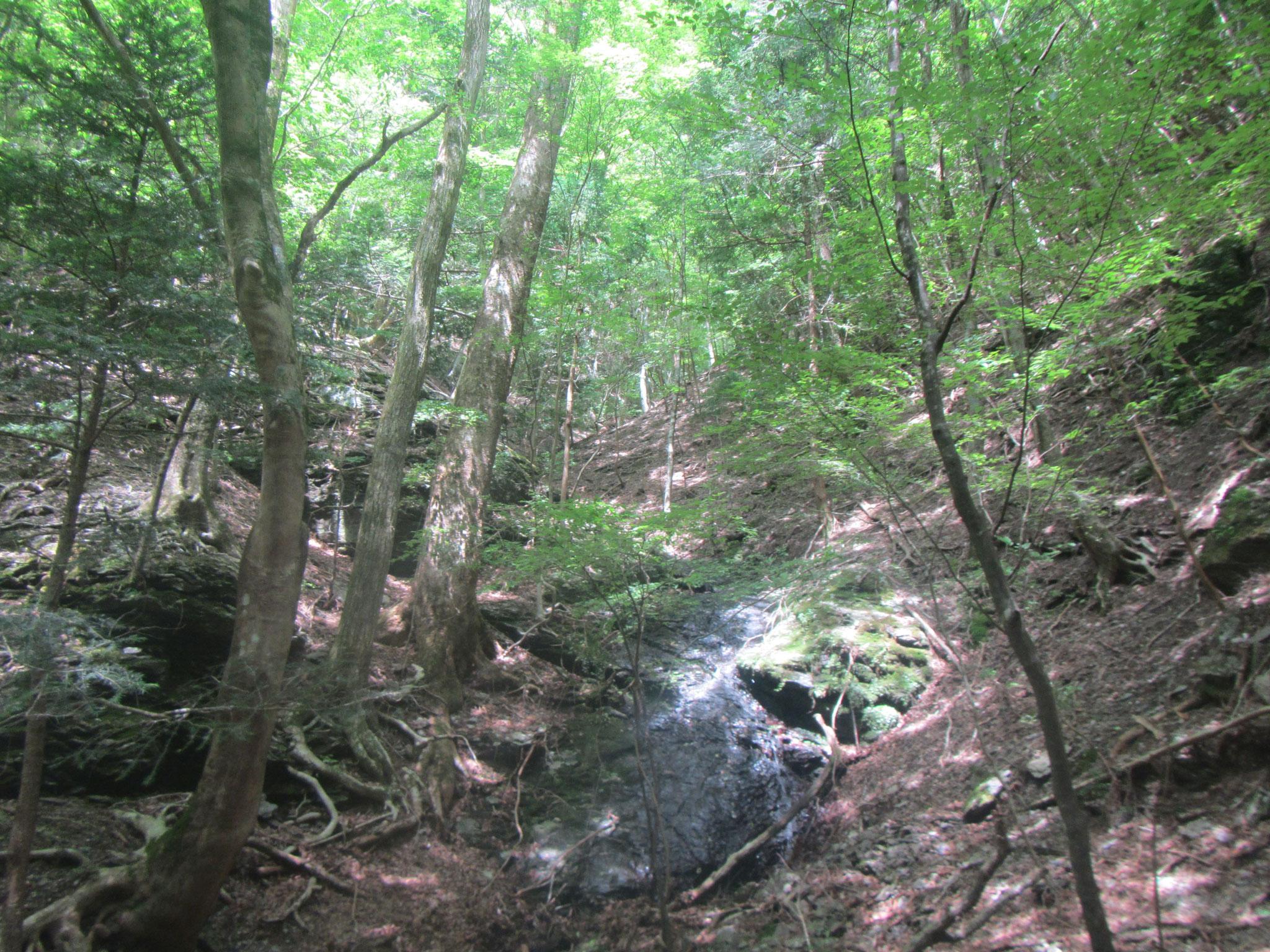 渡邊士乃武自然保護区  佐久間トラスト地(静岡県浜松市) 2006年取得 約294ha