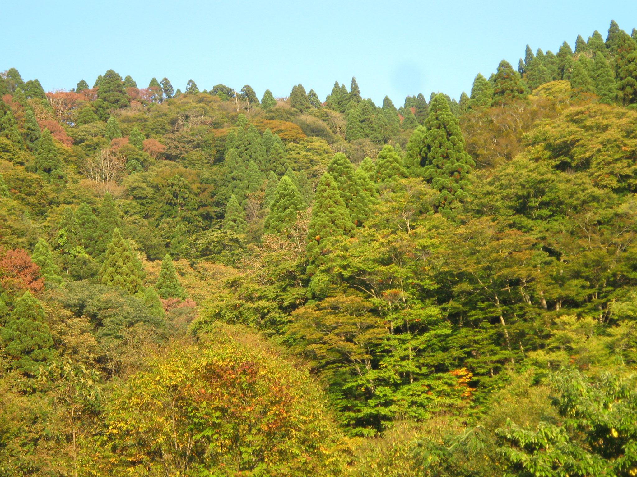 渡邊士乃武自然保護区  京北トラスト地(京都府京都市) 2006年取得 約16ha