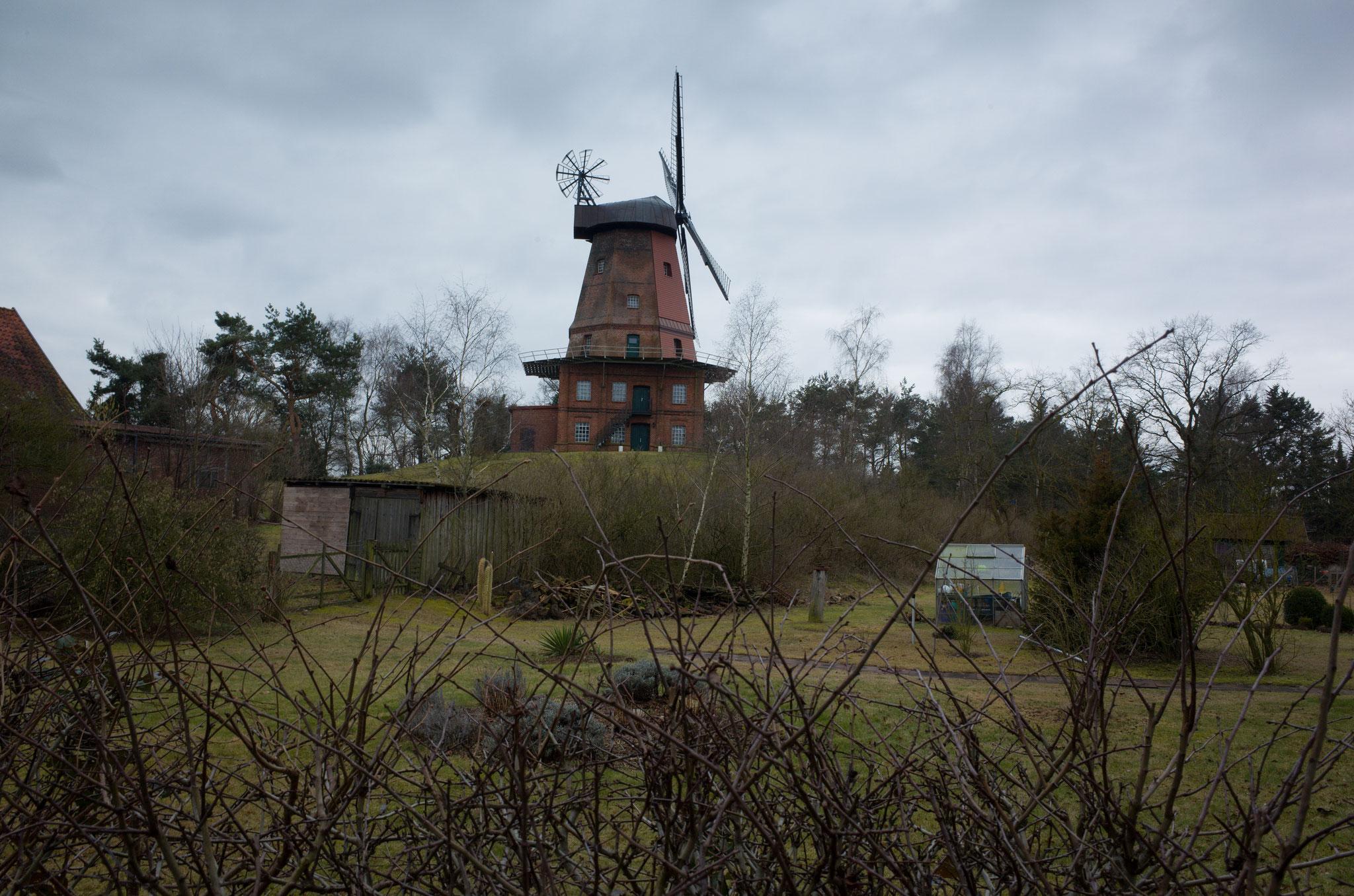Windmühle Hittbergen (Niedersachsen) am 25.02.2017