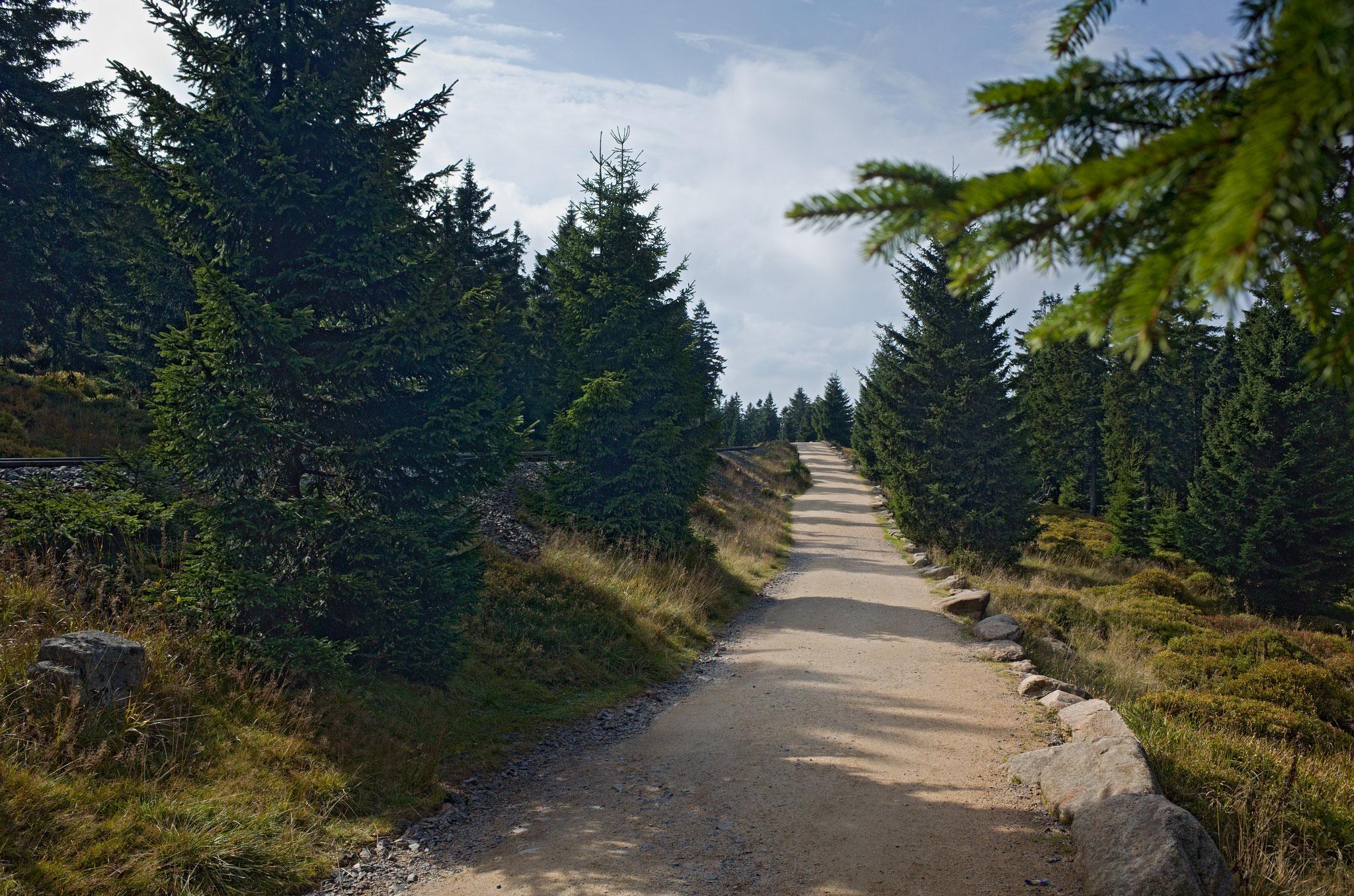 Harzüberquerung vom 24.09.-29.09.2017: Weg nach Torfhaus