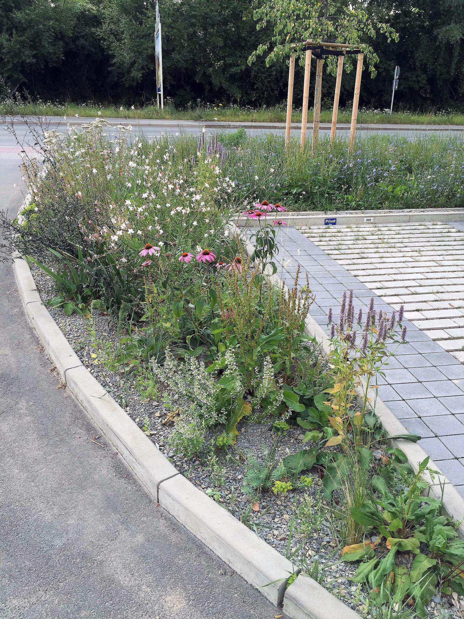 Pflanzfläche an der Parkplatzeinfahrt