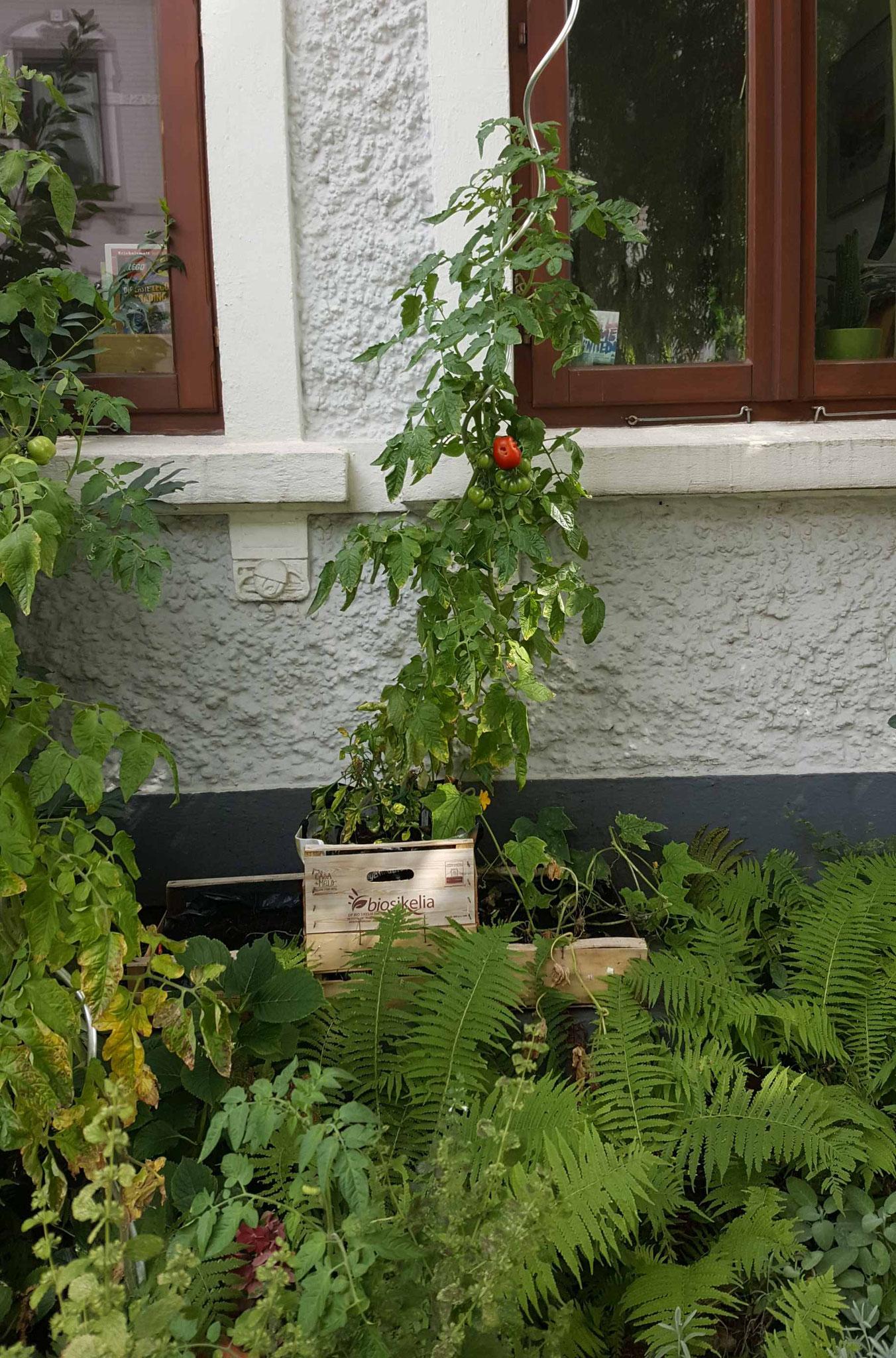 2. Preis:  Vorgarten Geibelstrasse 61 / Familie Petersen