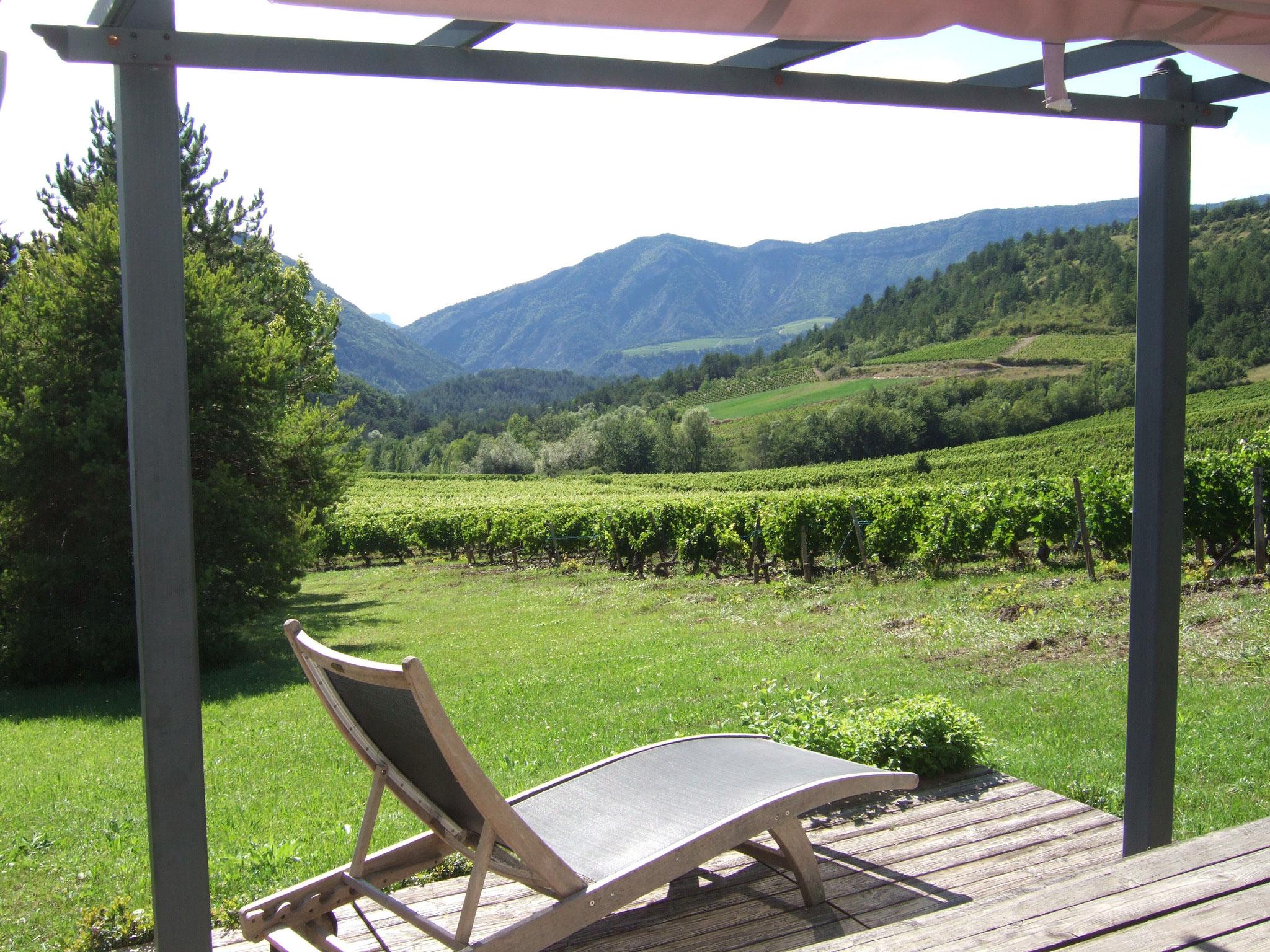 aan de rand van de wijnvelden
