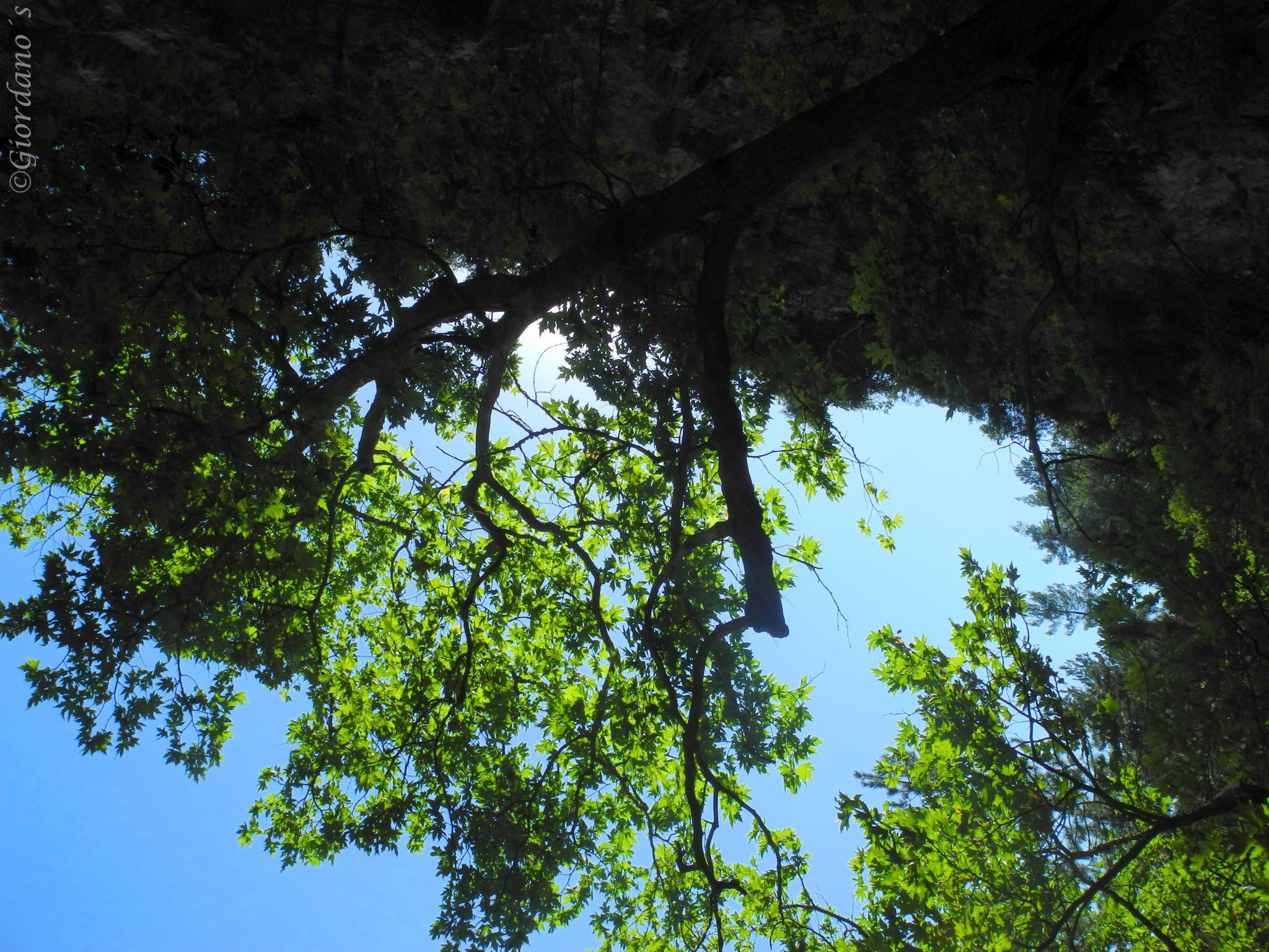 Drymonas, Euböa-GR, Wasserfälle