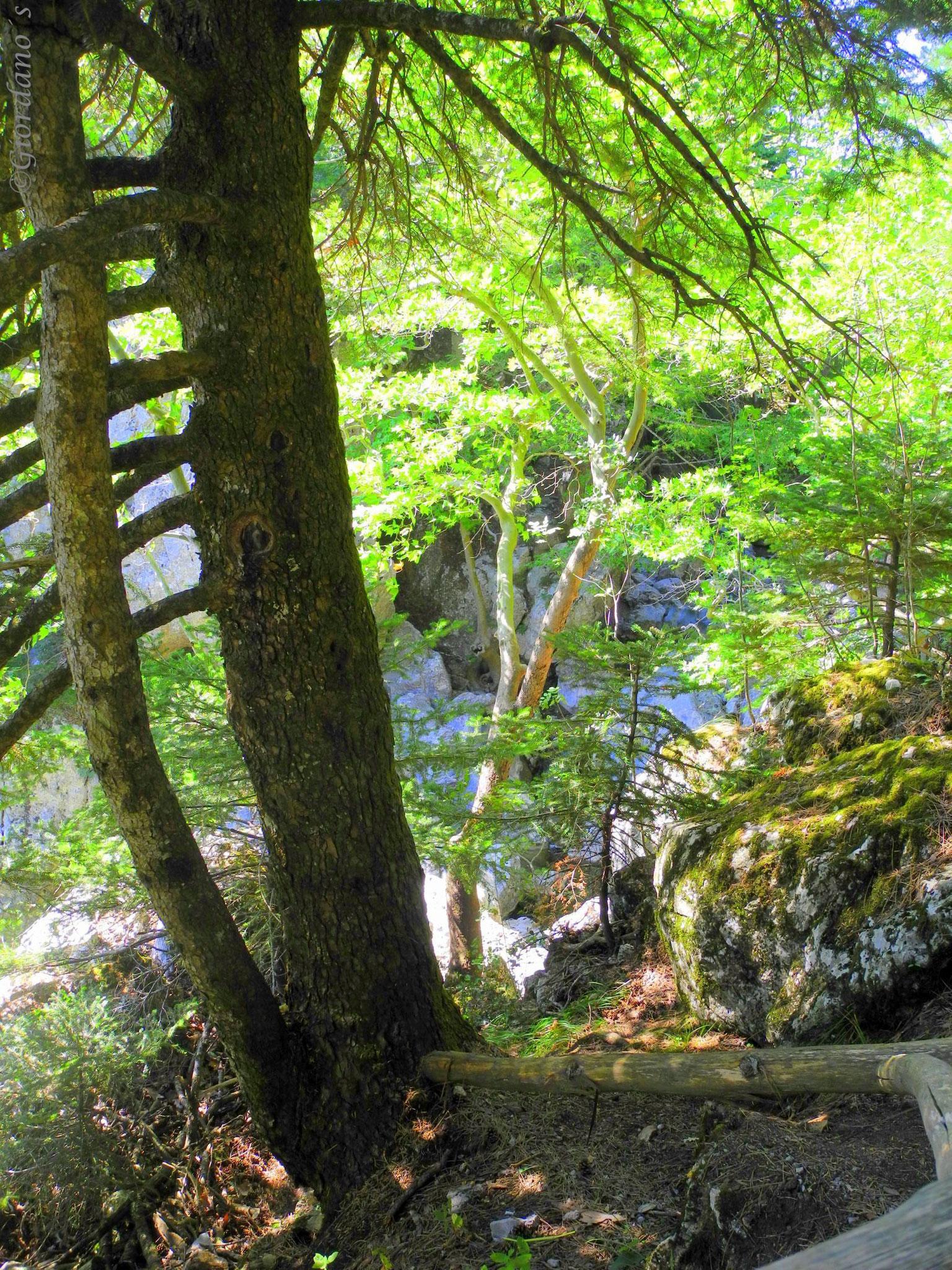 Drymonas, Euböa-GR, Wasserfall